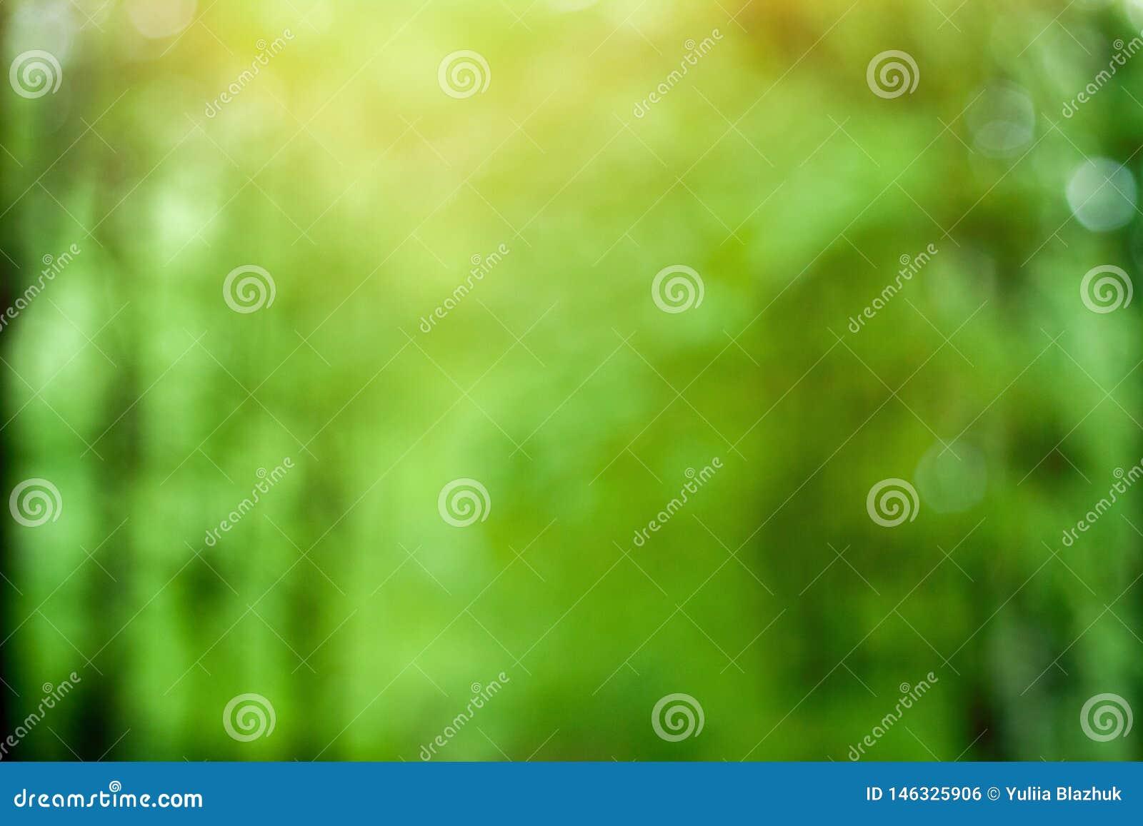 Запачканная зеленая солнечная предпосылка леса