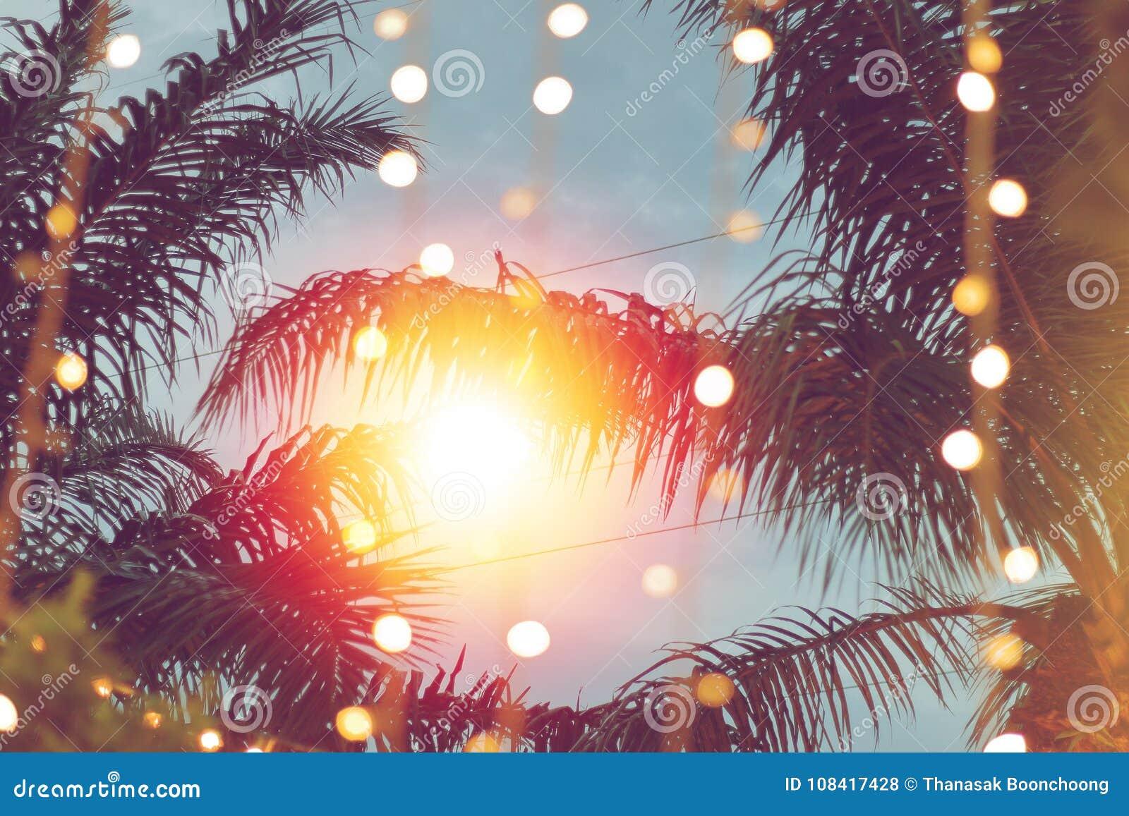 Запачканное светлое bokeh с пальмой кокоса на заходе солнца