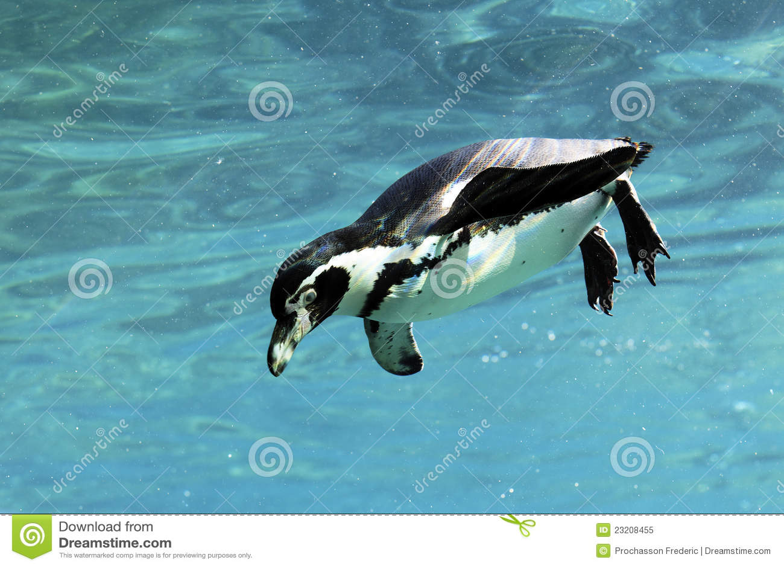 заплывание auk