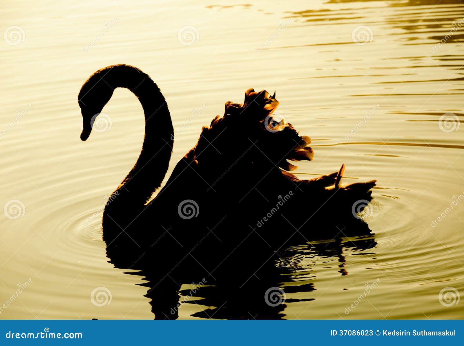 Заплывание лебедя