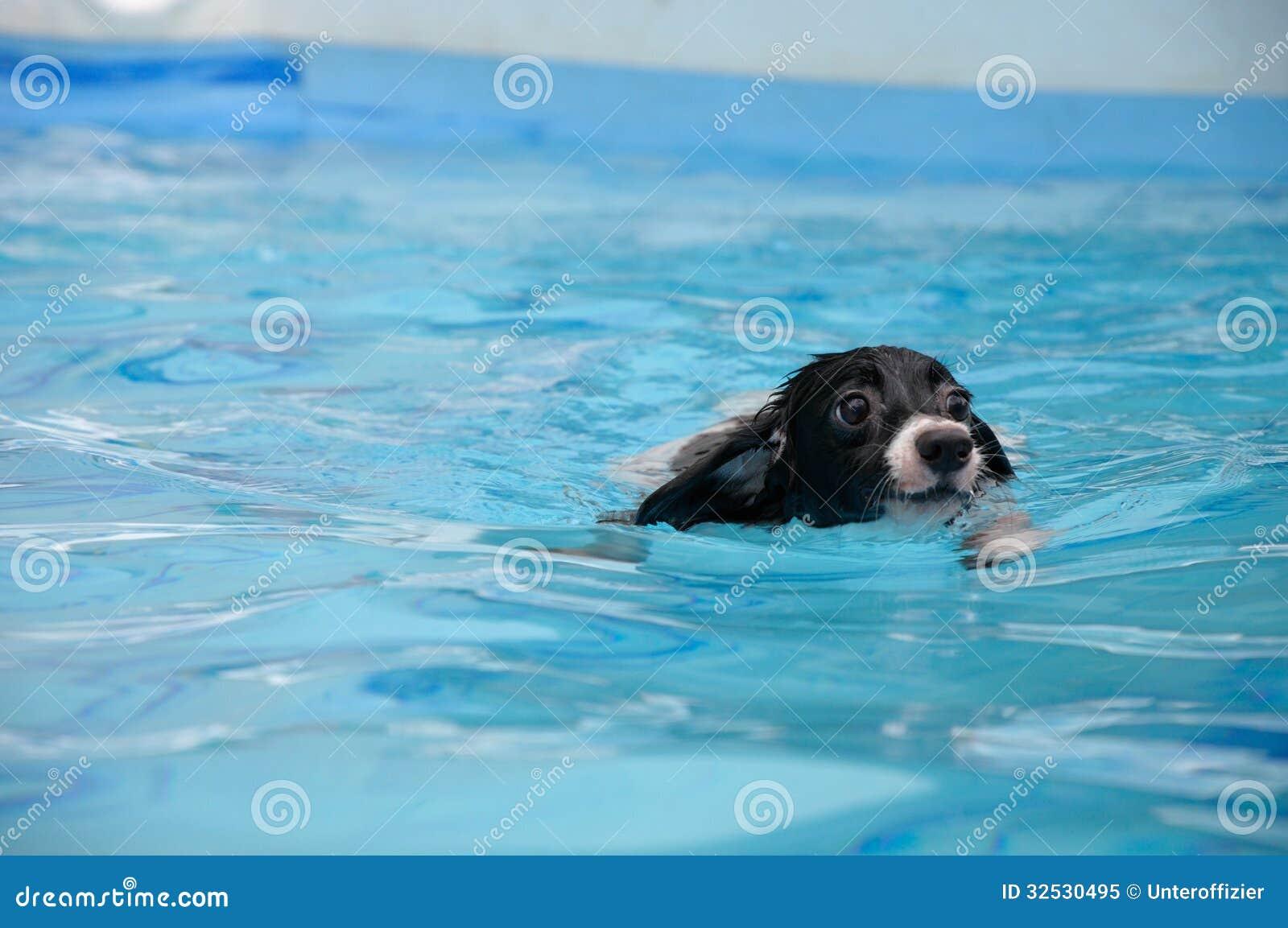 Заплывание собаки