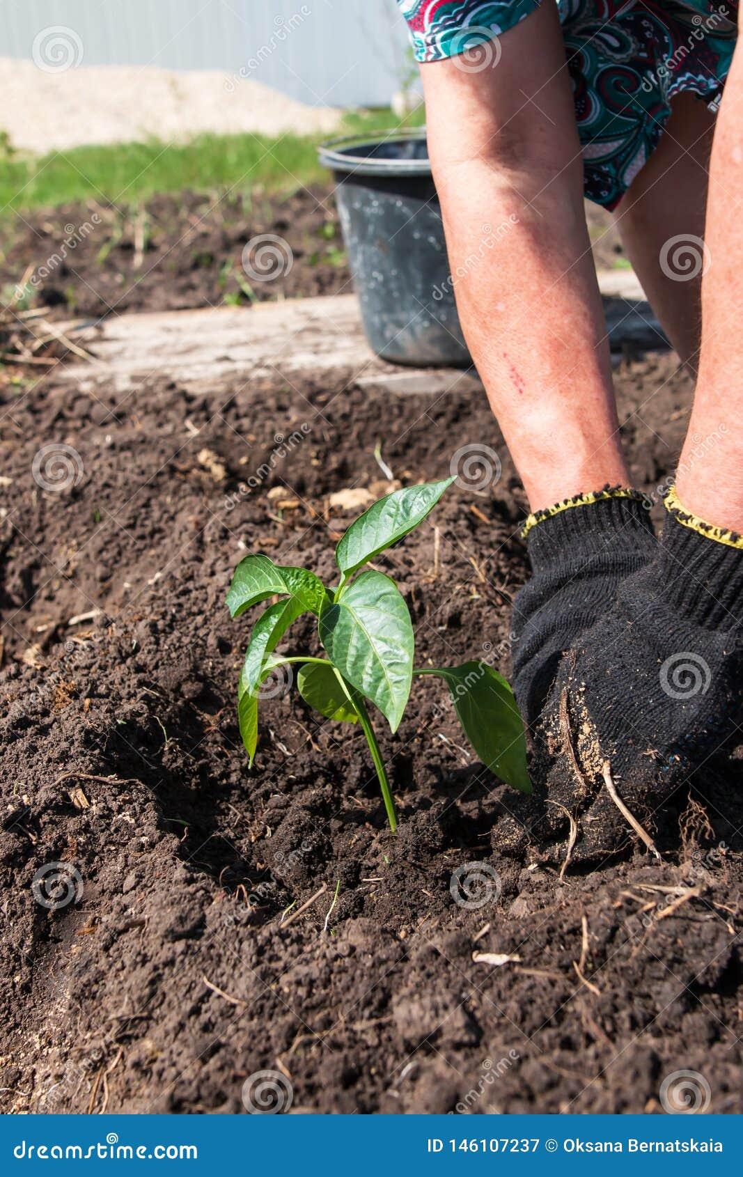 Засаживать заводы в саде