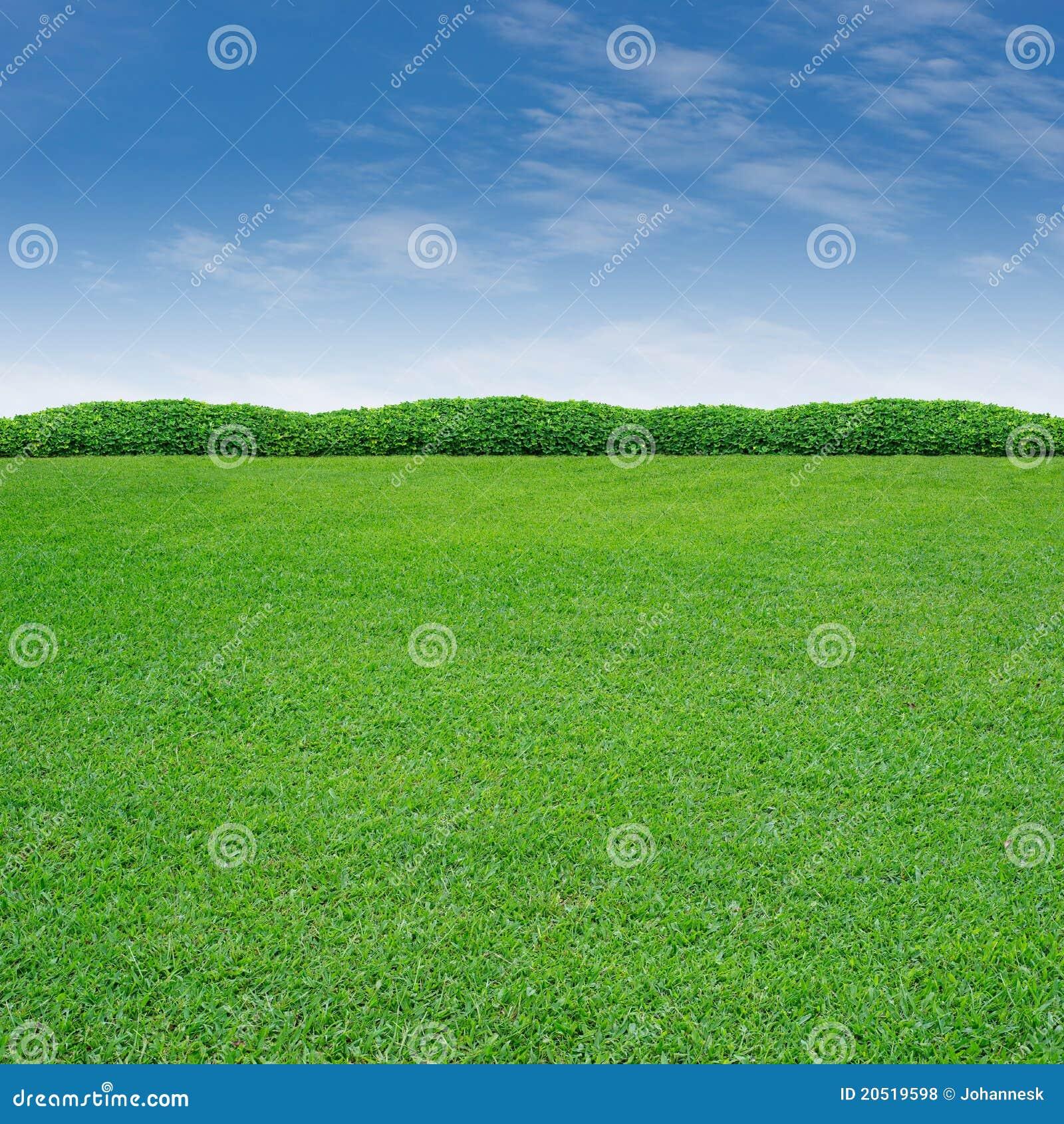 засевайте shrub травой
