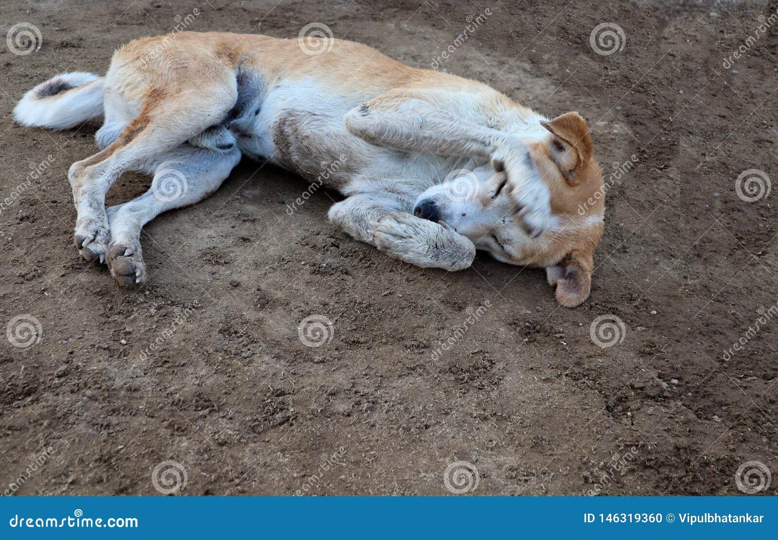 Застенчивая собака спать на земле