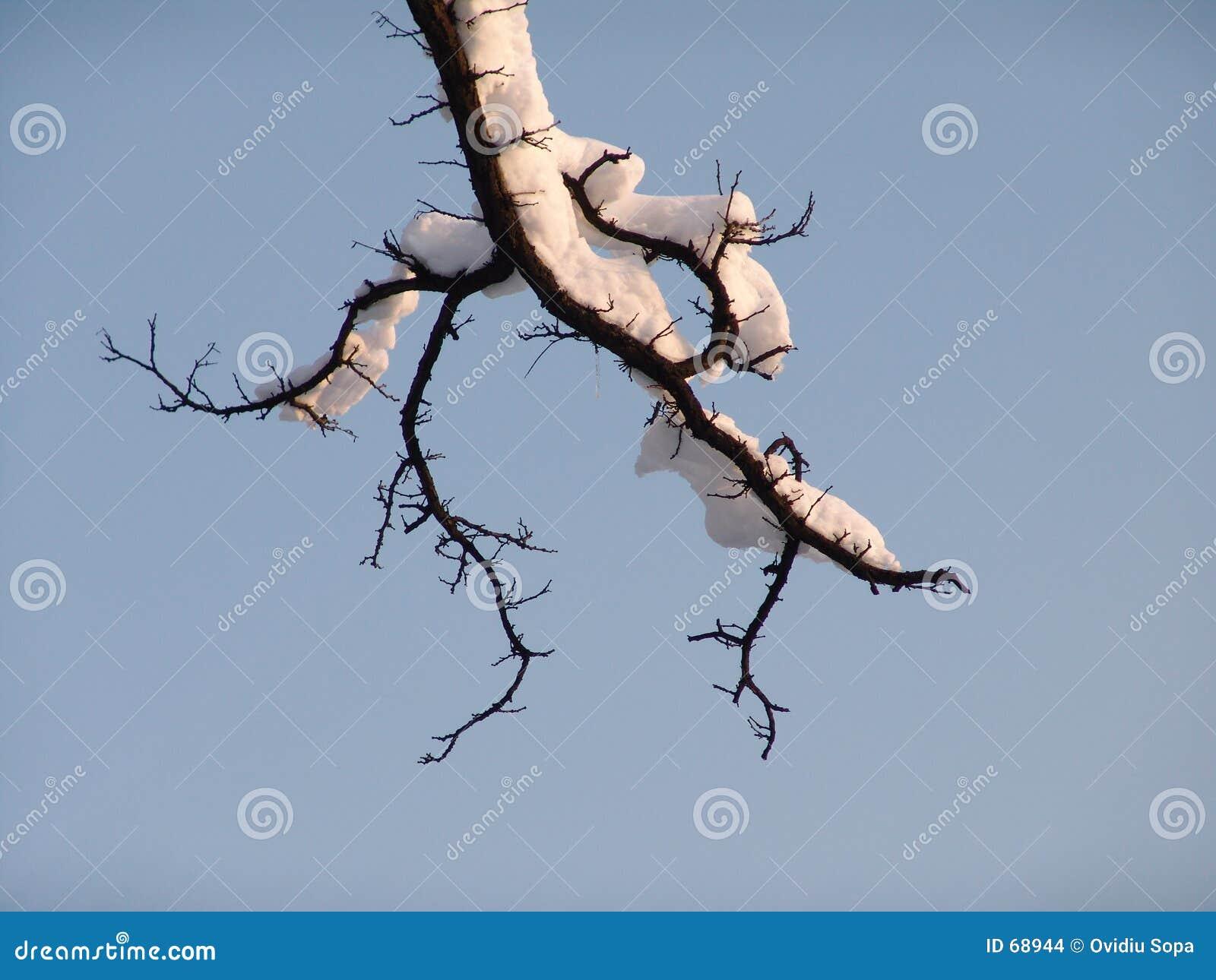 засушливый вал ветви