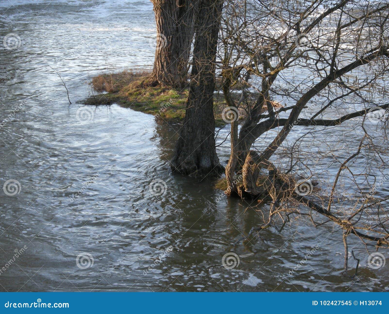 Затопленное река в Центральной Европе Потоки и штормы очень общие должные к изменению климата Вода, поток