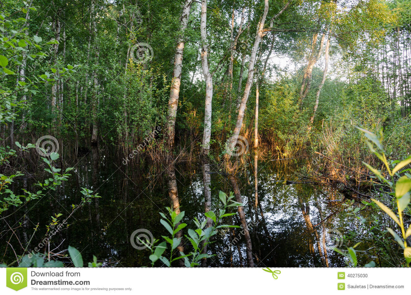 Затопленные отражения захода солнца лесных деревьев на воде