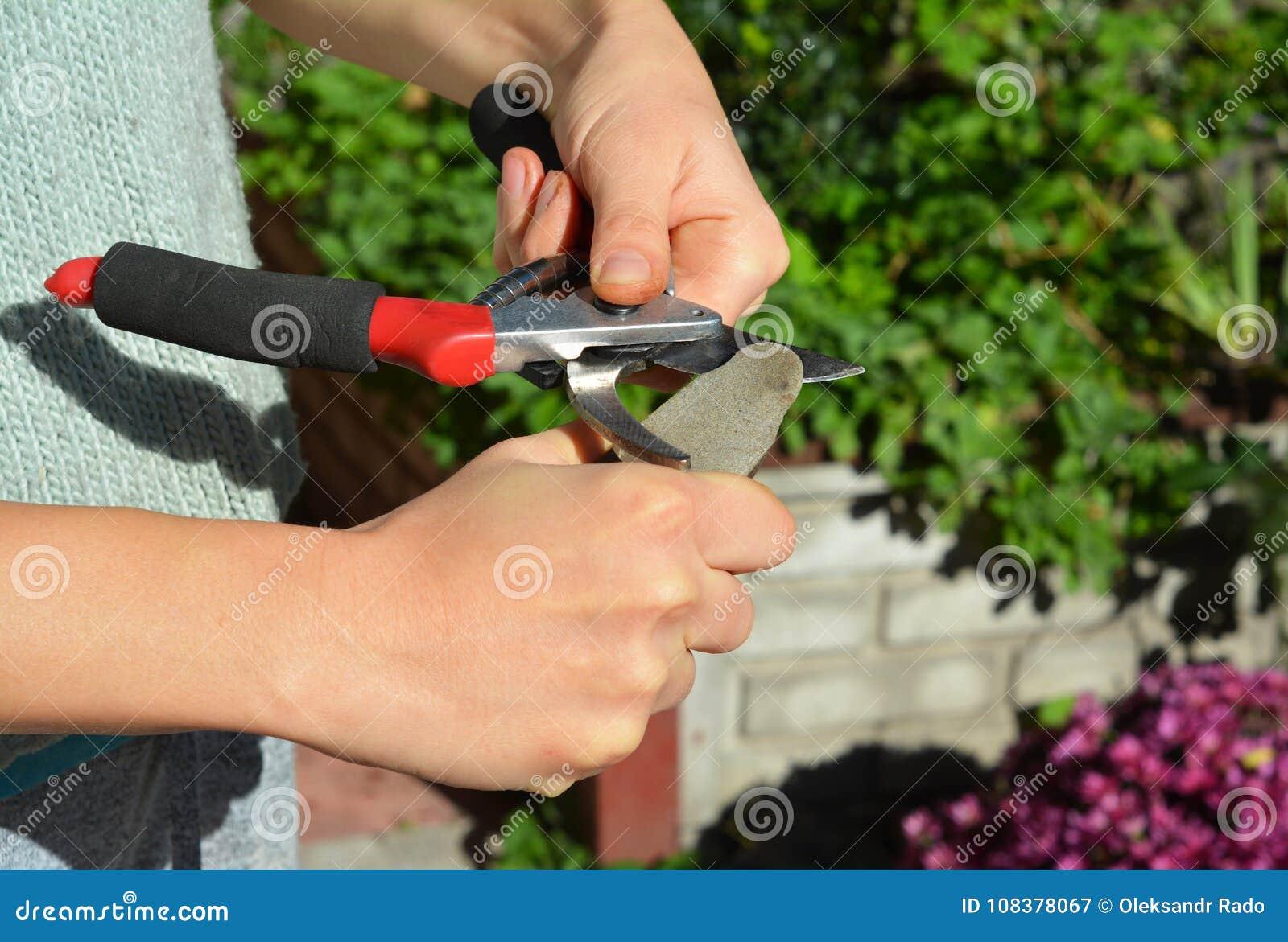 Заточите подрезая ножницы для совершенного отрезка Очищать и точит