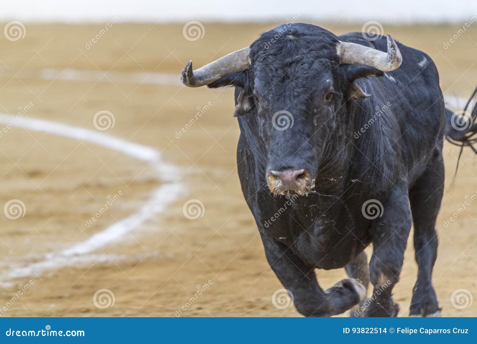 Захват диаграммы храброго быка в бое быков