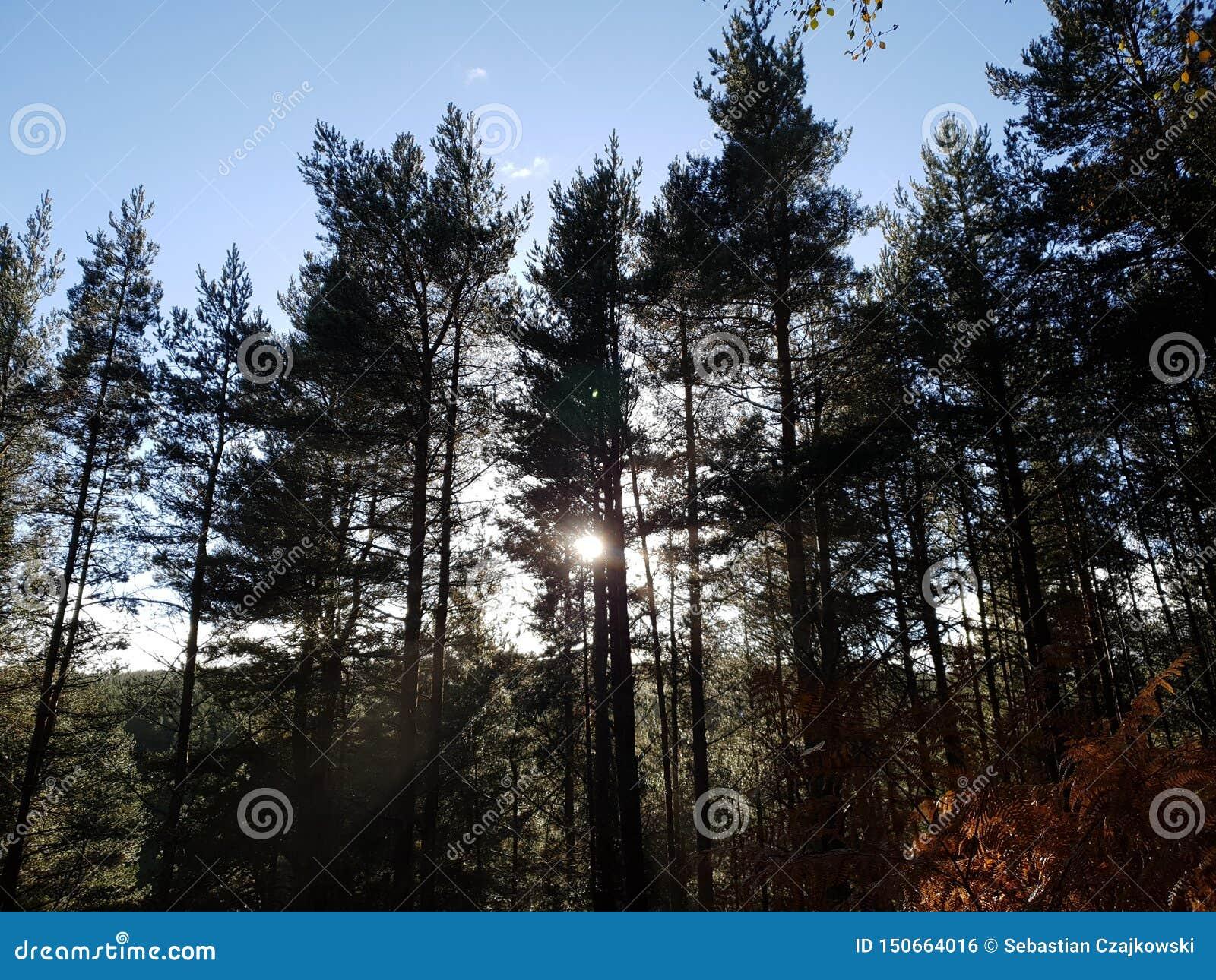 Заход солнца в лесном дереве