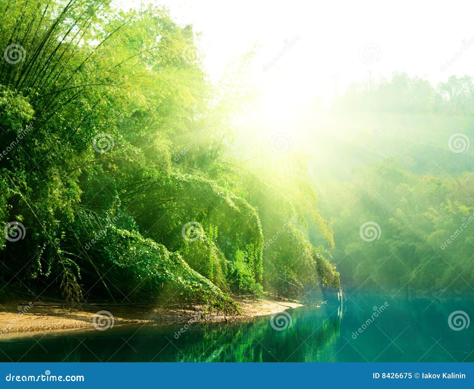 заход солнца джунглей