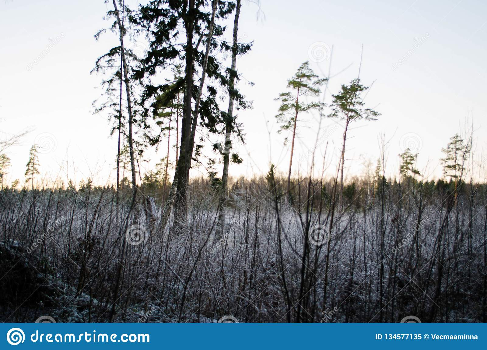 Заход солнца зимы от взгляда леса, на поле Otanki, Латвия