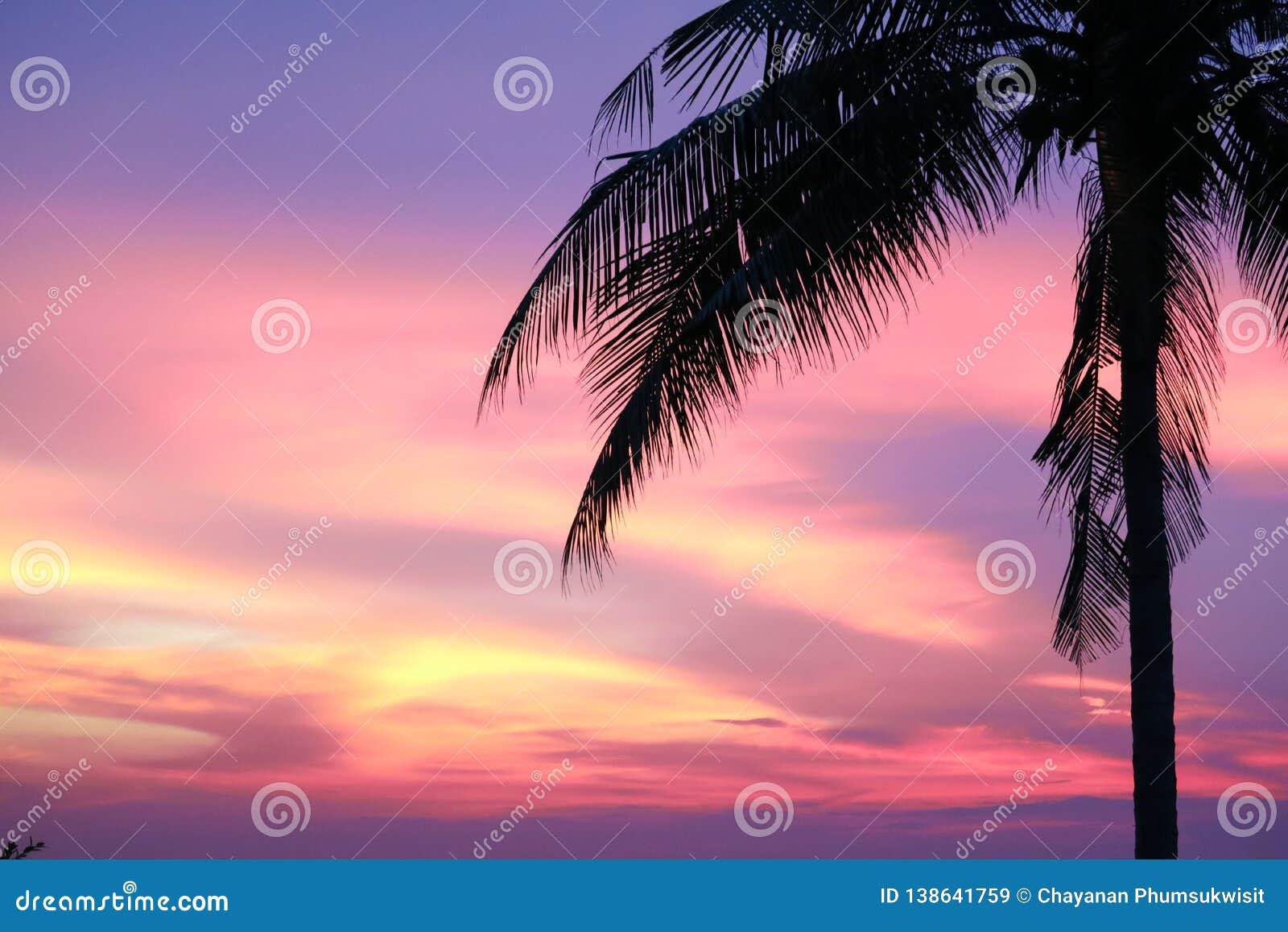 заход солнца на дереве моря и силуэта и красочном небе вечера облака