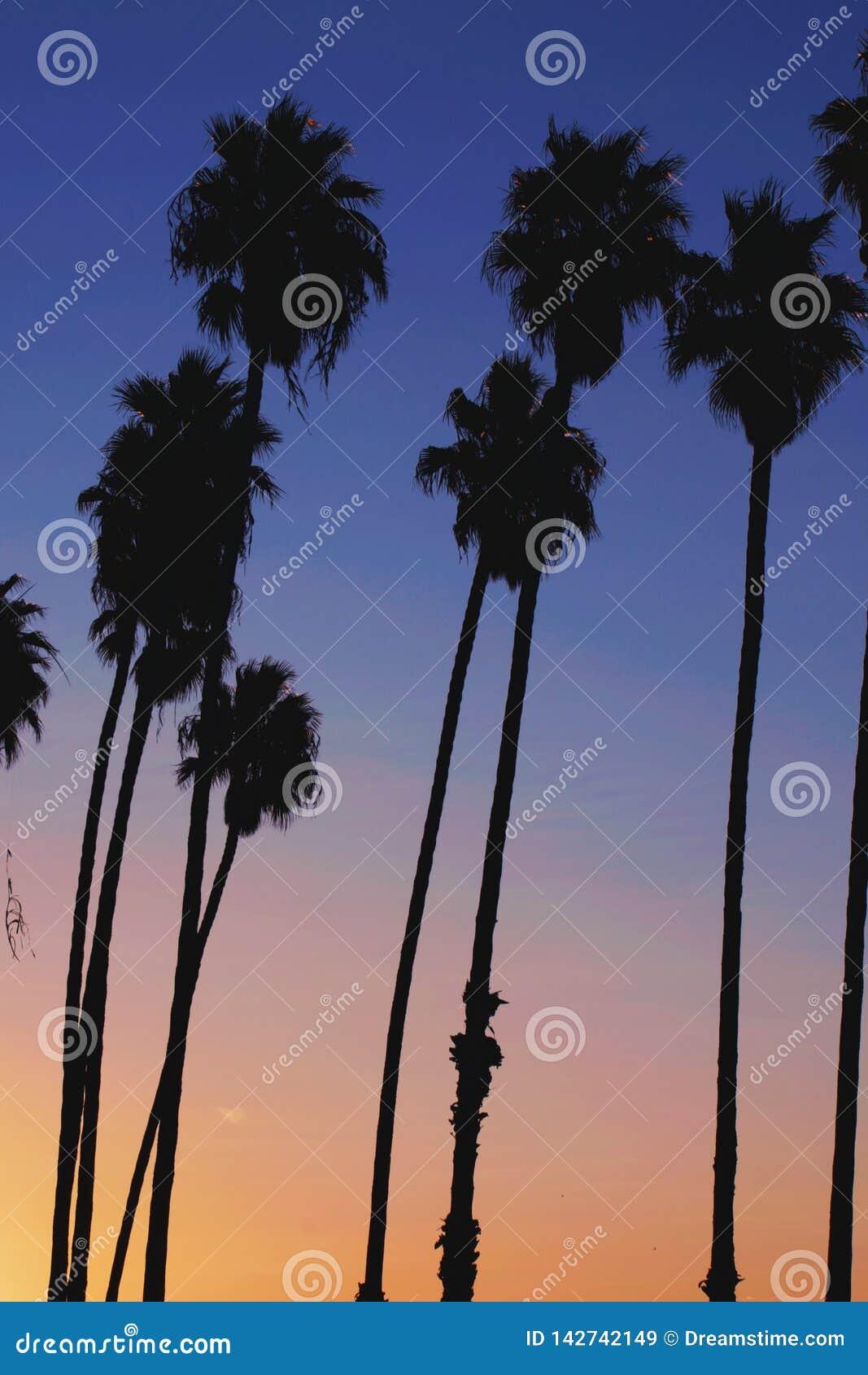 Заход солнца пальмы Калифорния