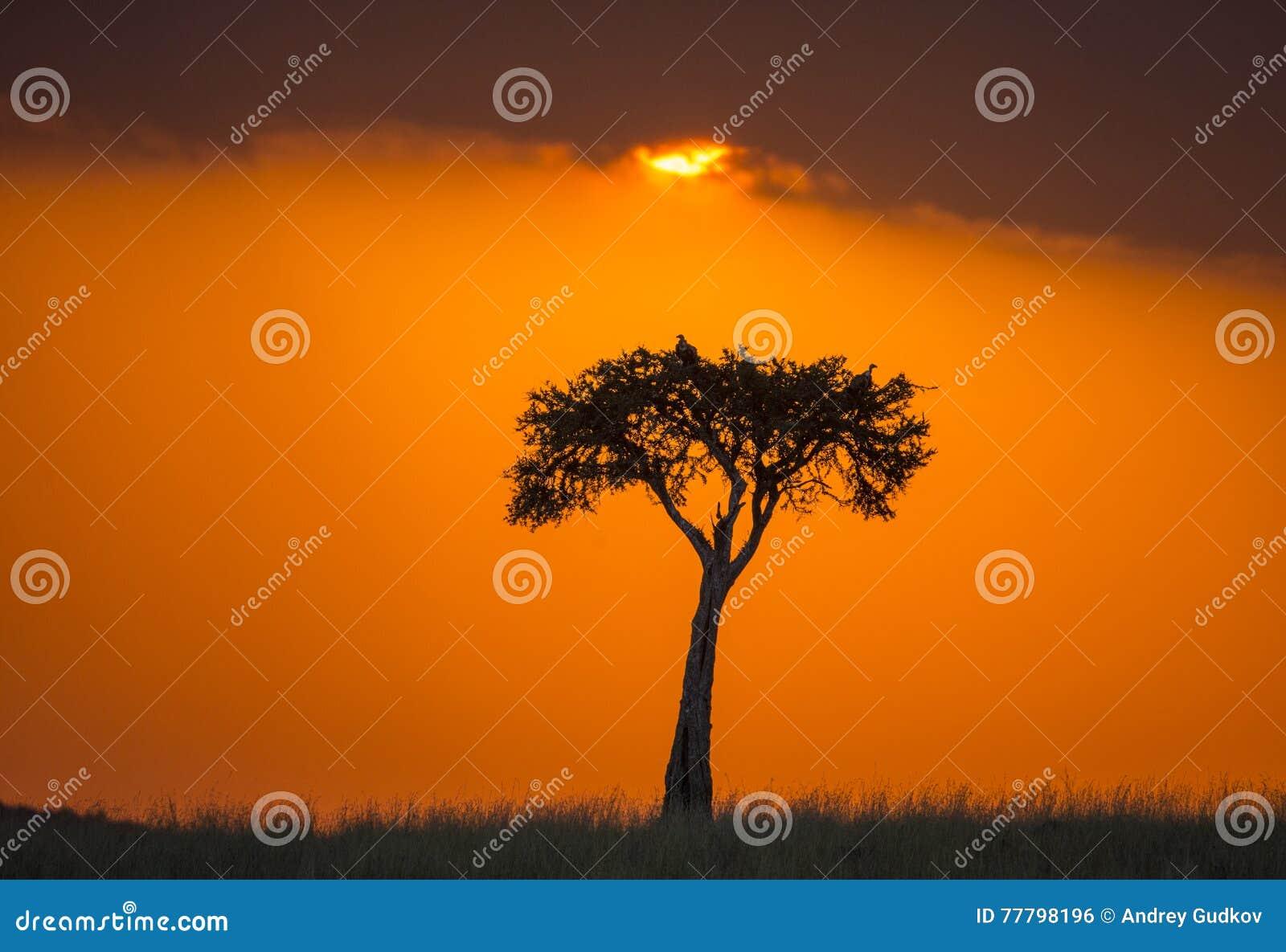Заход солнца в национальном парке Maasai Mara вышесказанного Кения