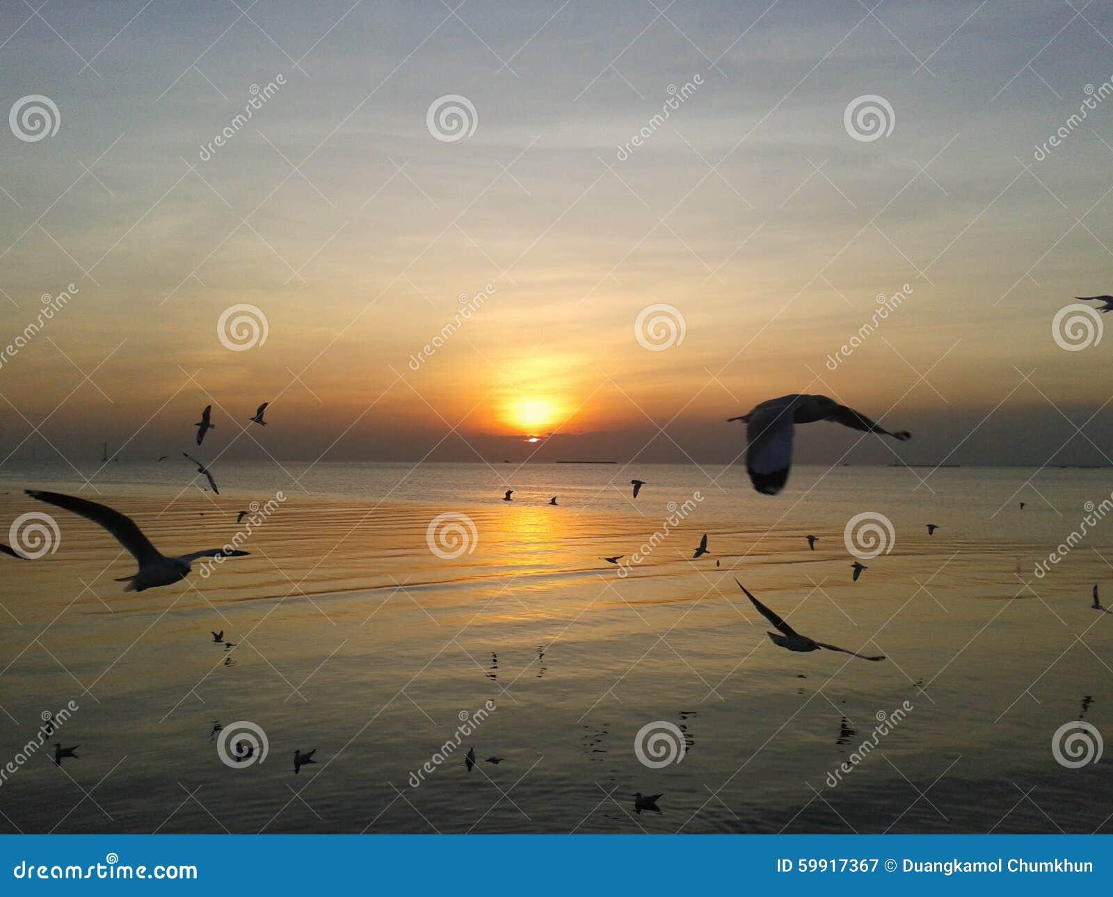 Заход солнца с чайкой моря на Bangpu Таиланде