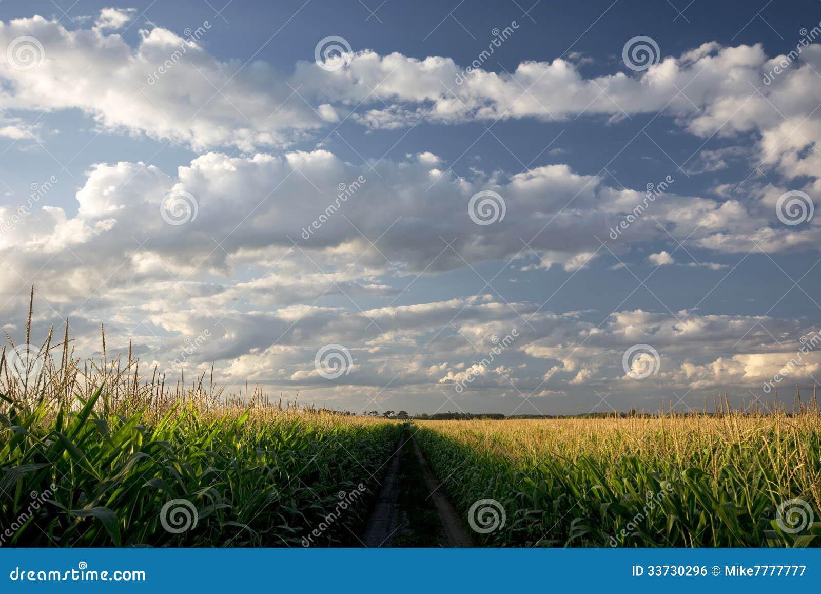 Заходящее солнце над кукурузным полем и грязной улицей, Midwest, США