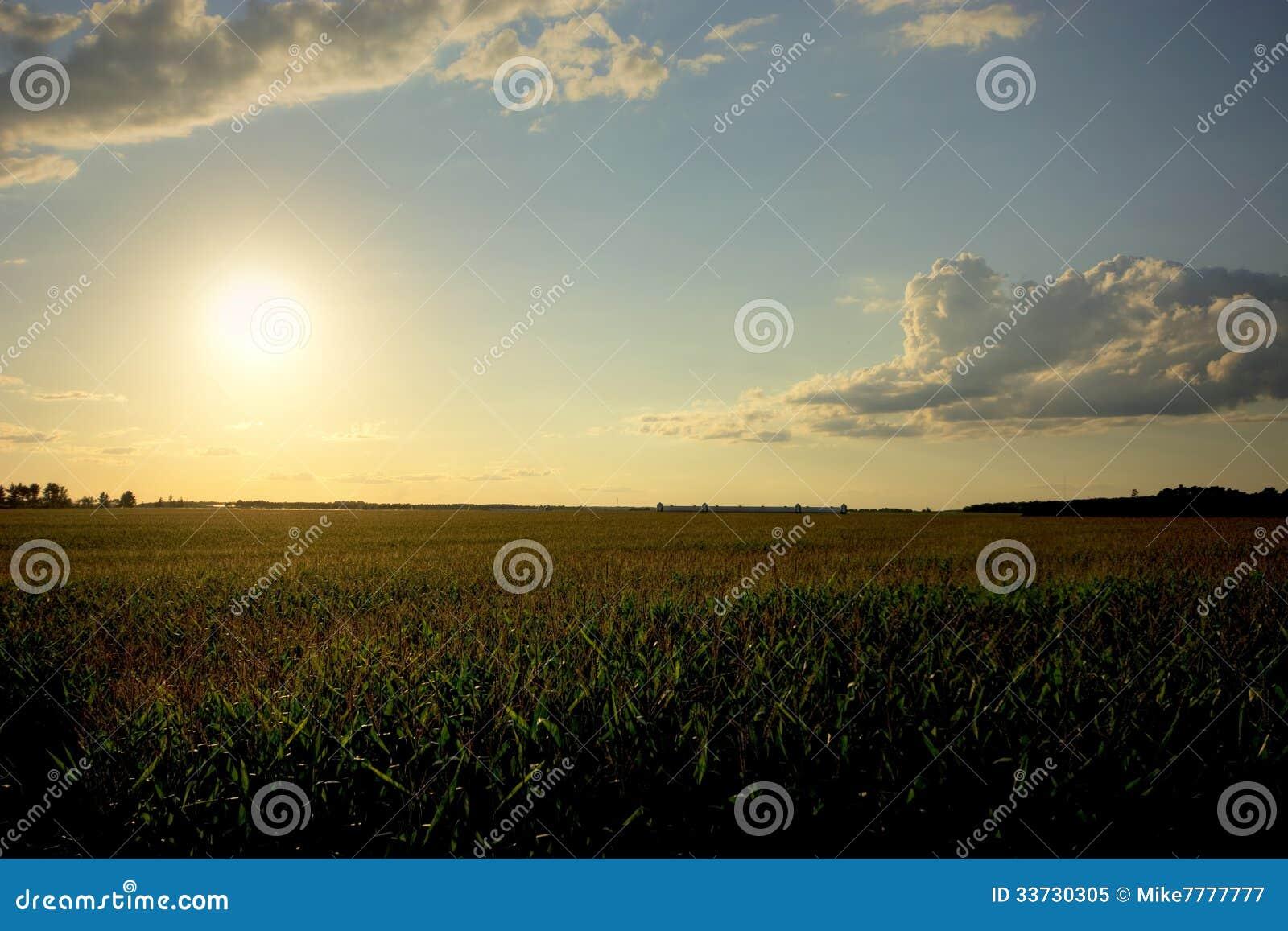 Заходящее солнце над кукурузным полем, Midwest, США
