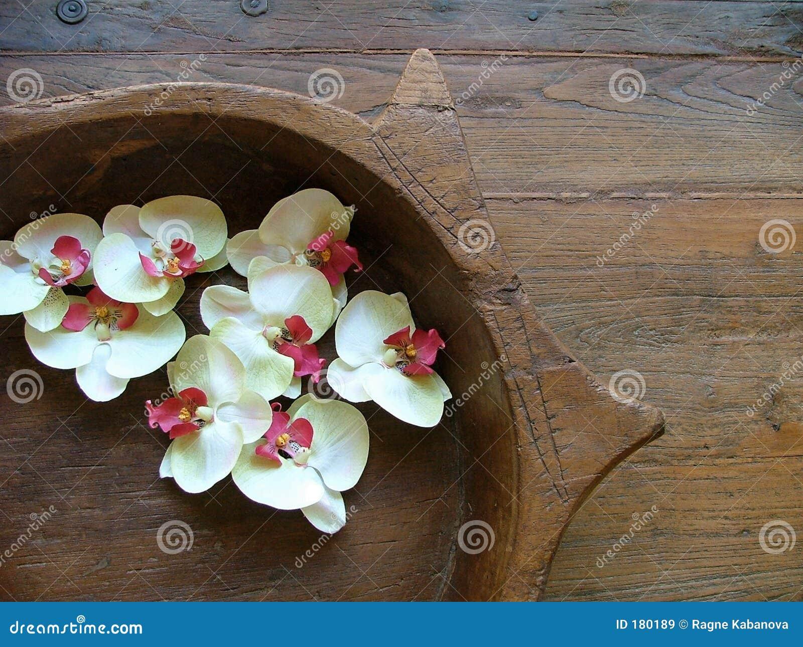 зацветает орхидея