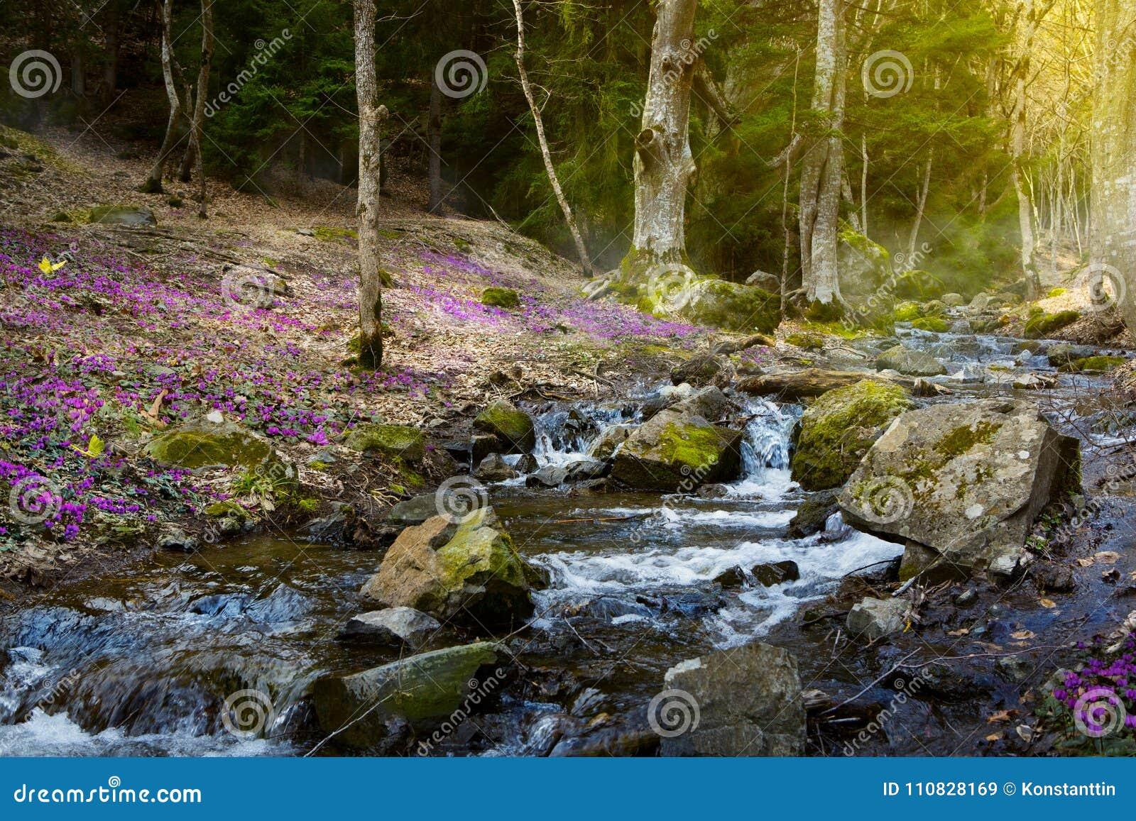 Зацветая лес весны; Цветки потока и весны горы