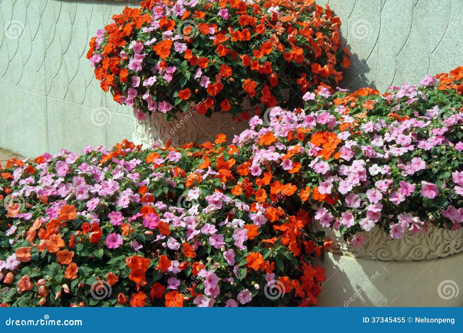 зацветая цветки