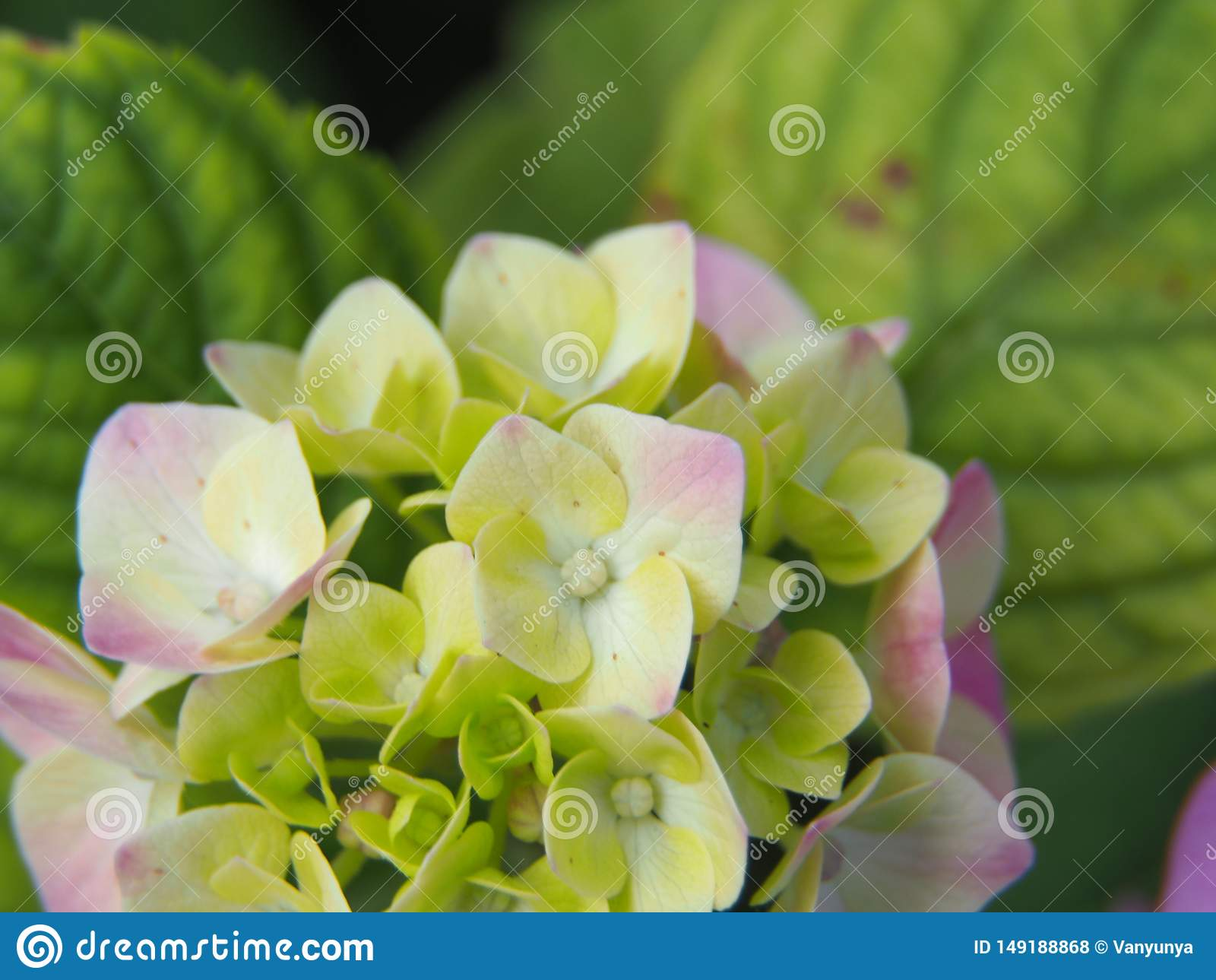 Зацветая цветок в режиме макроса