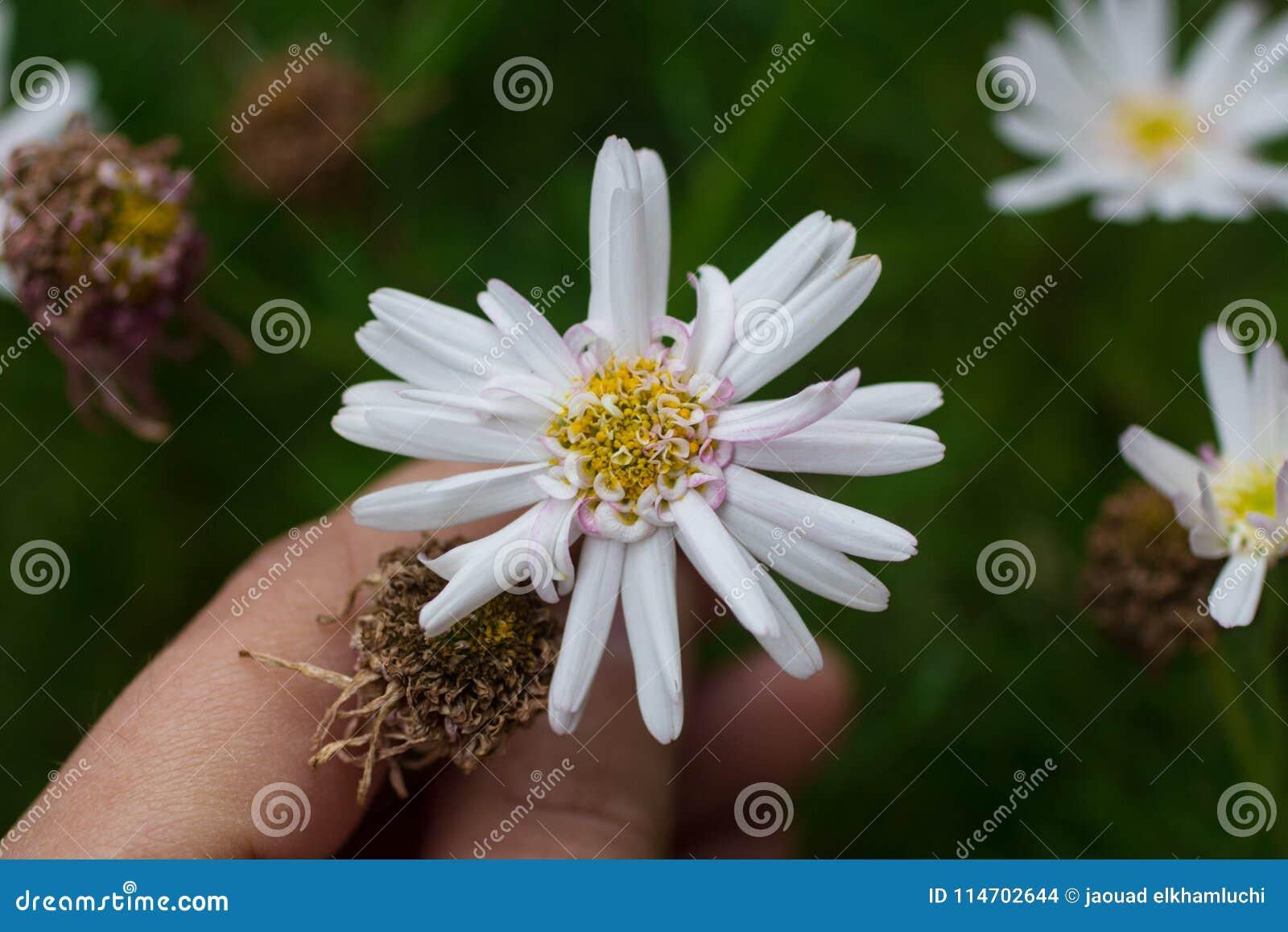 зацветите удерживание руки