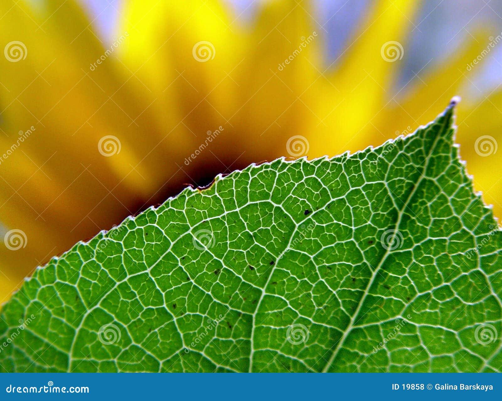 за листьями