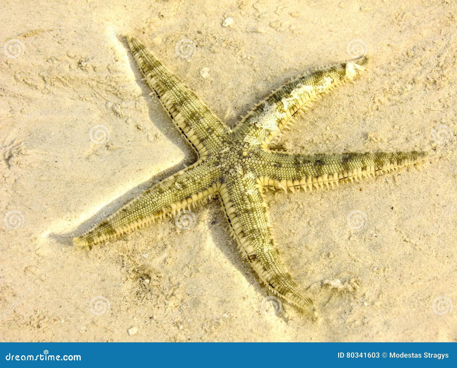 Звезда пляжа Malapascua
