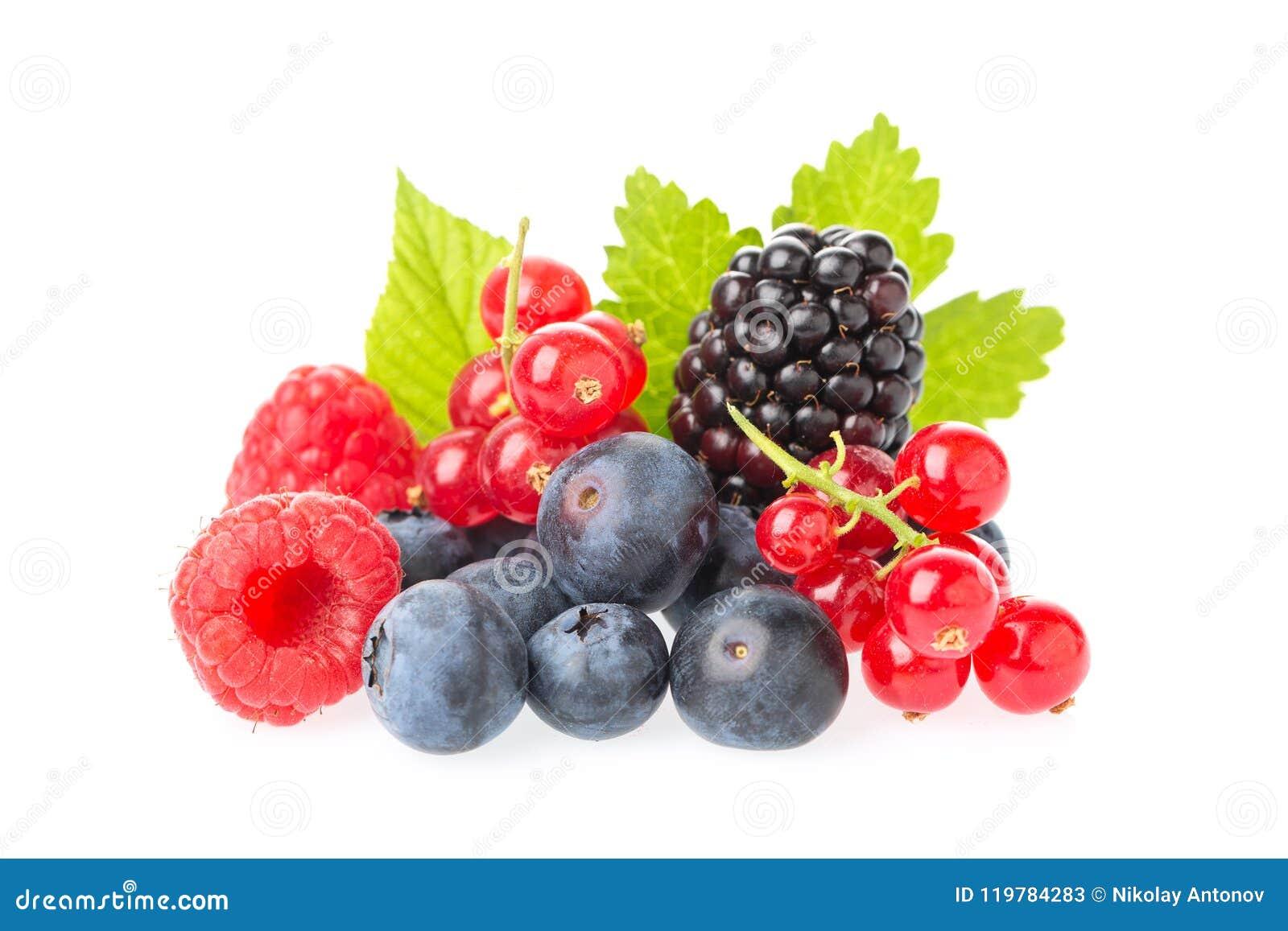 Здоровая группа ягод свежих продуктов Макрос снял свежих поленик, голубик, ежевик, красной смородины и ежевики с leav