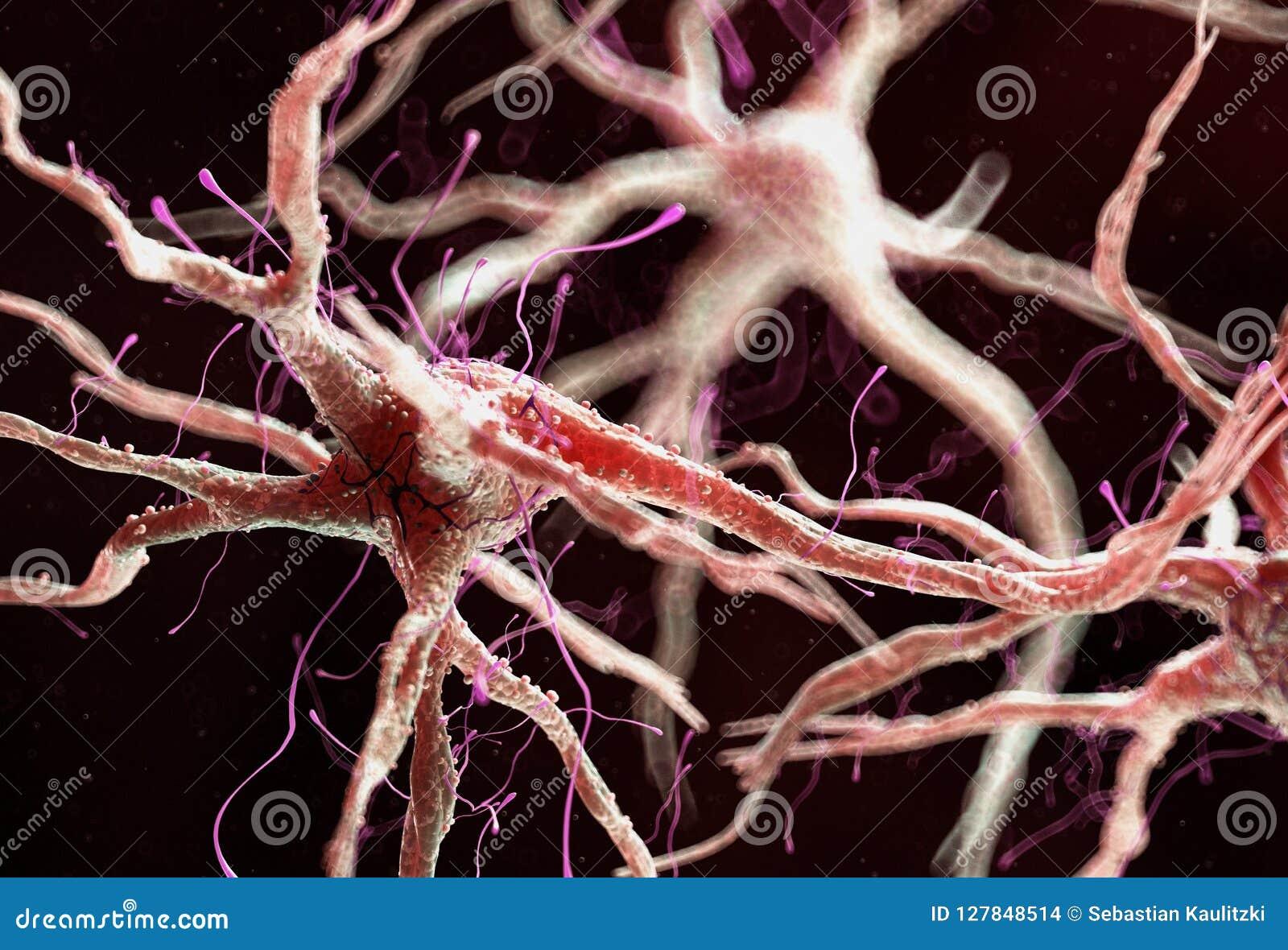 Здоровая человеческая нервная клетка