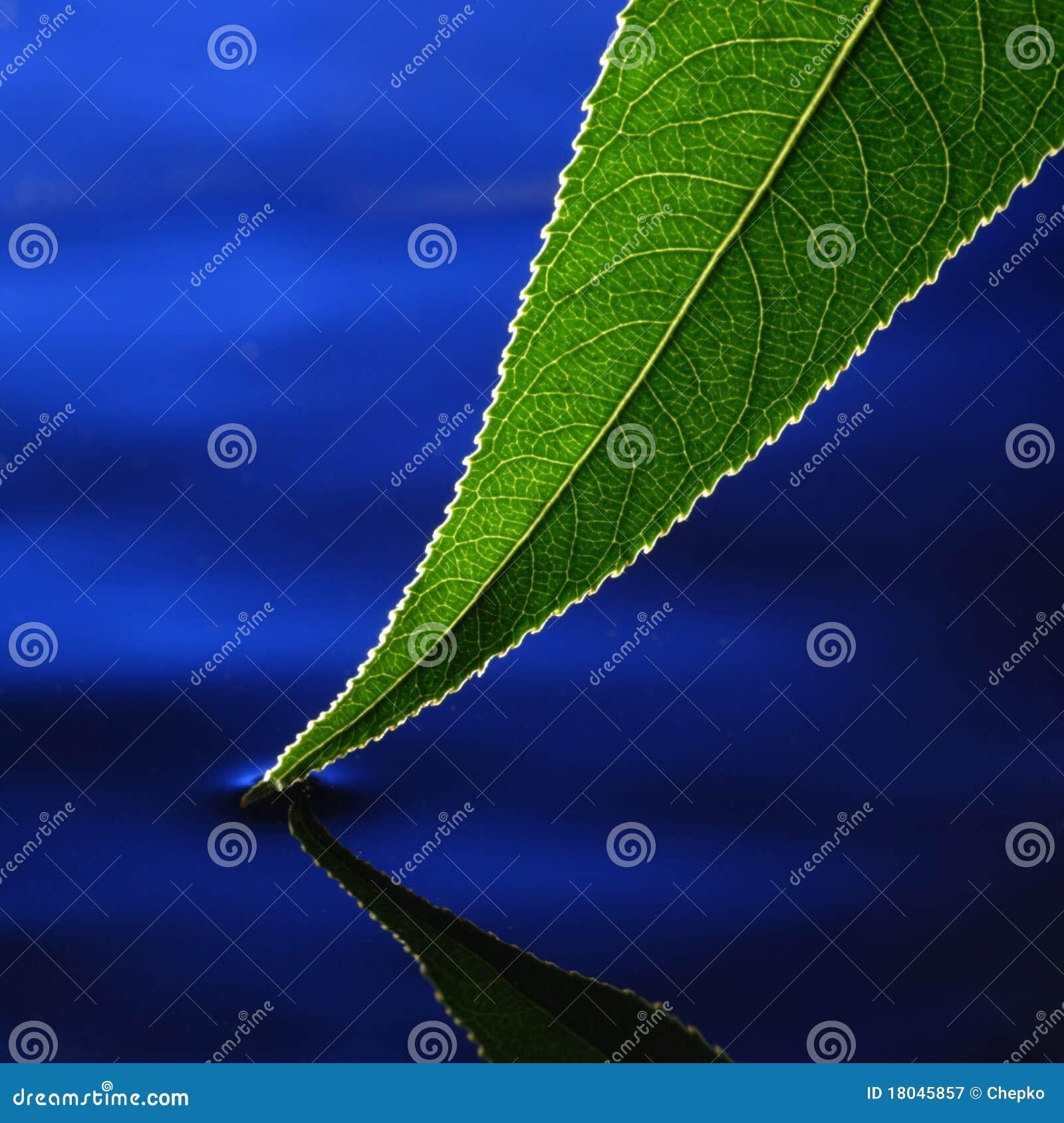 зеленая вода листьев