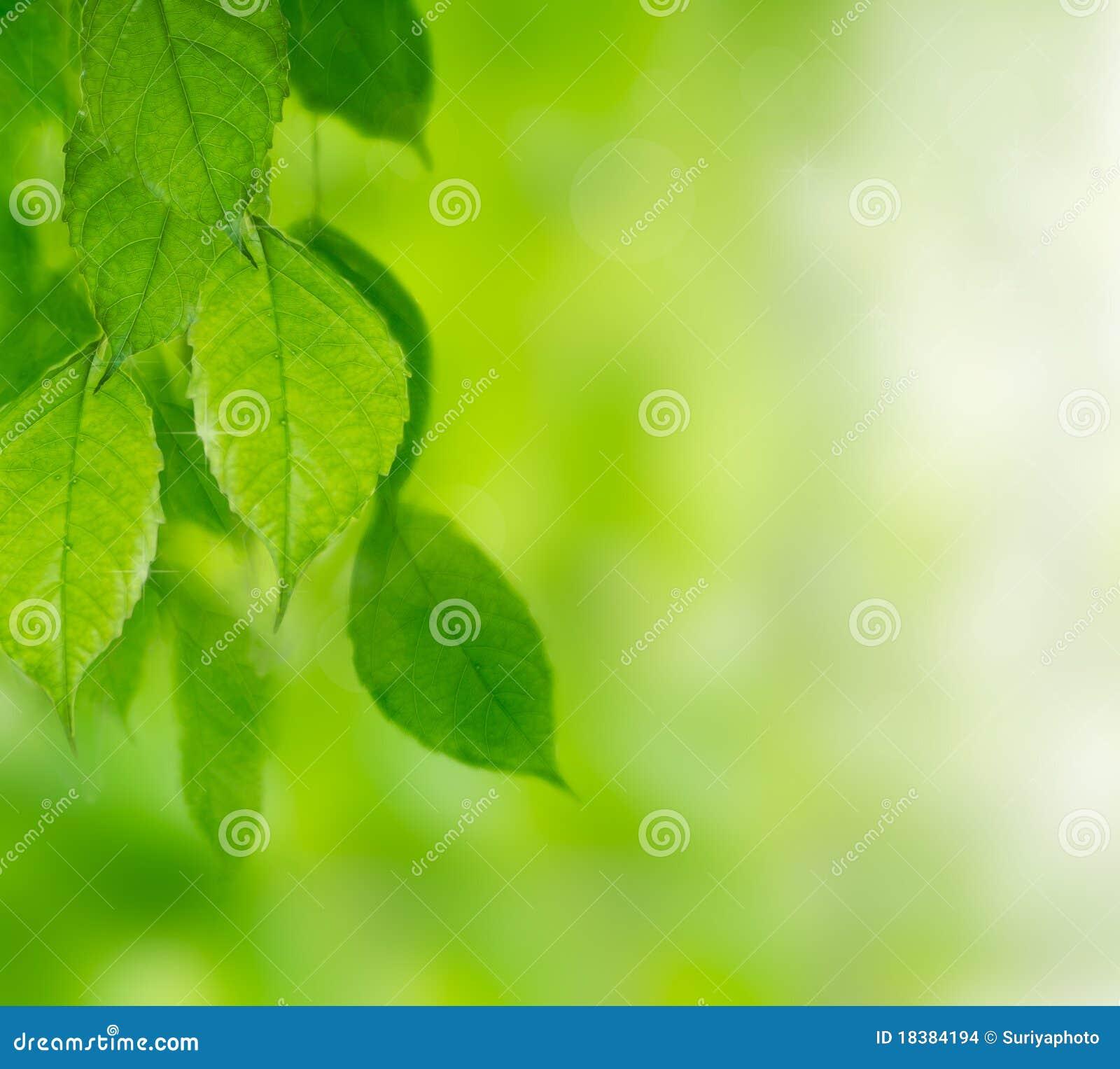 Зеленая предпосылка листьев