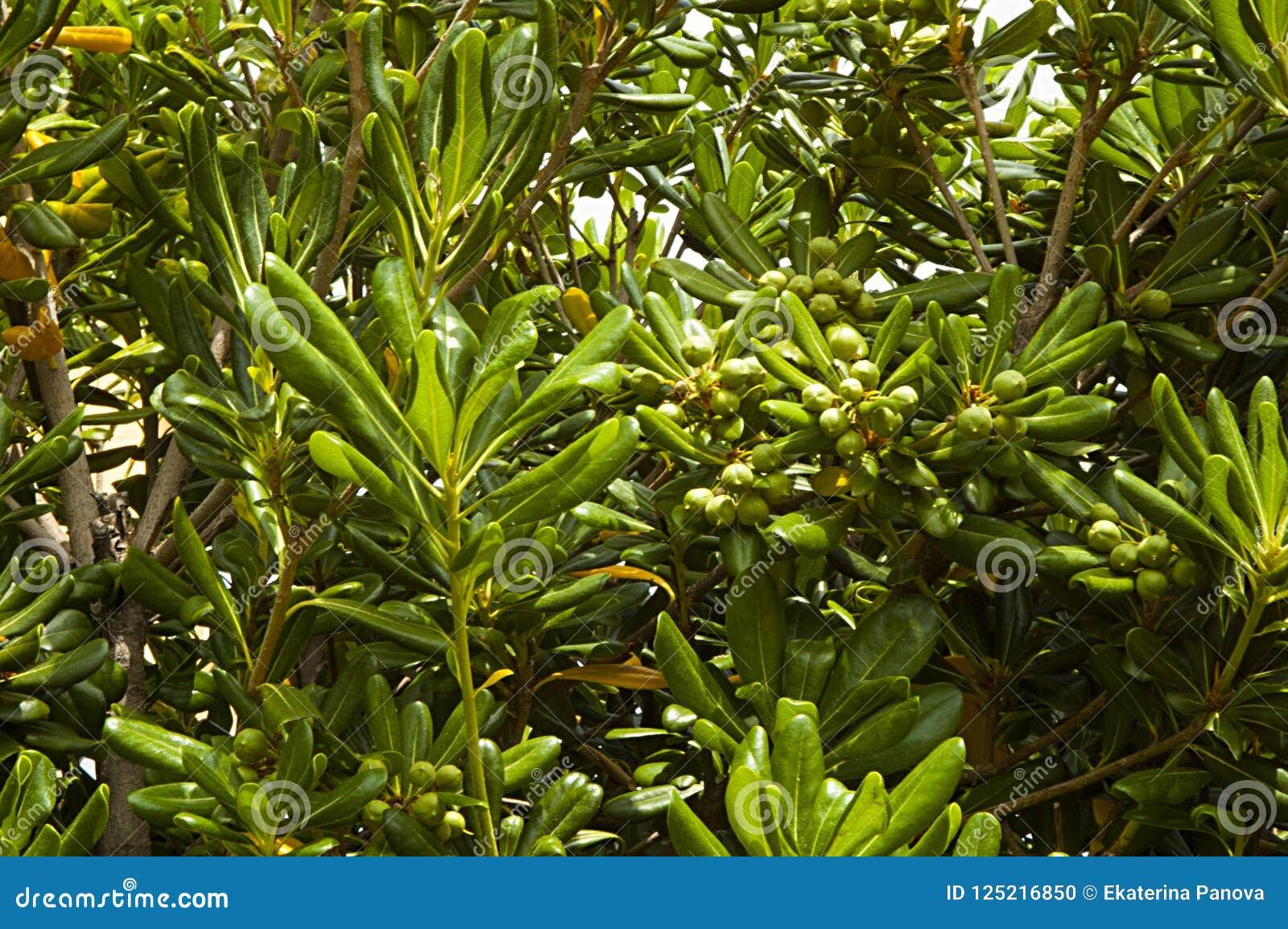 Зеленая предпосылка с тропическими заводами и деревьями