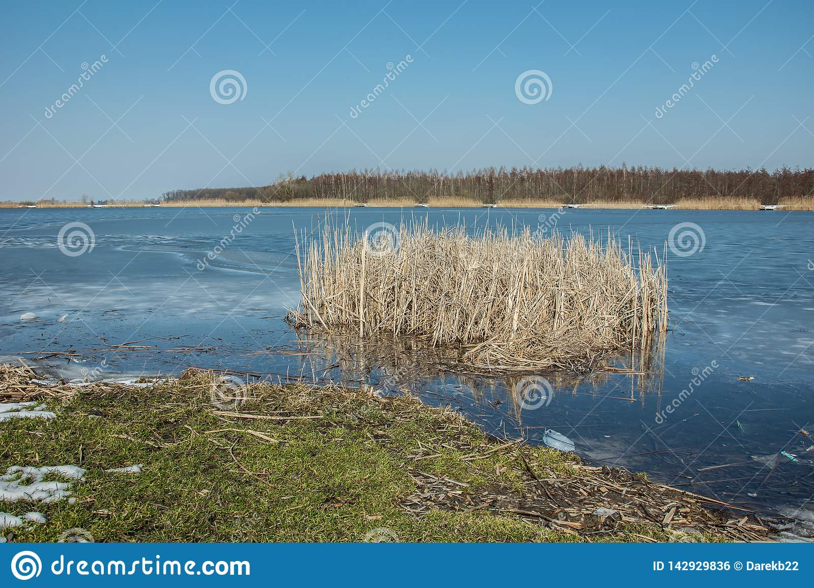 Зеленая трава на краю замороженного озера и тростников Горизонт и голубое небо