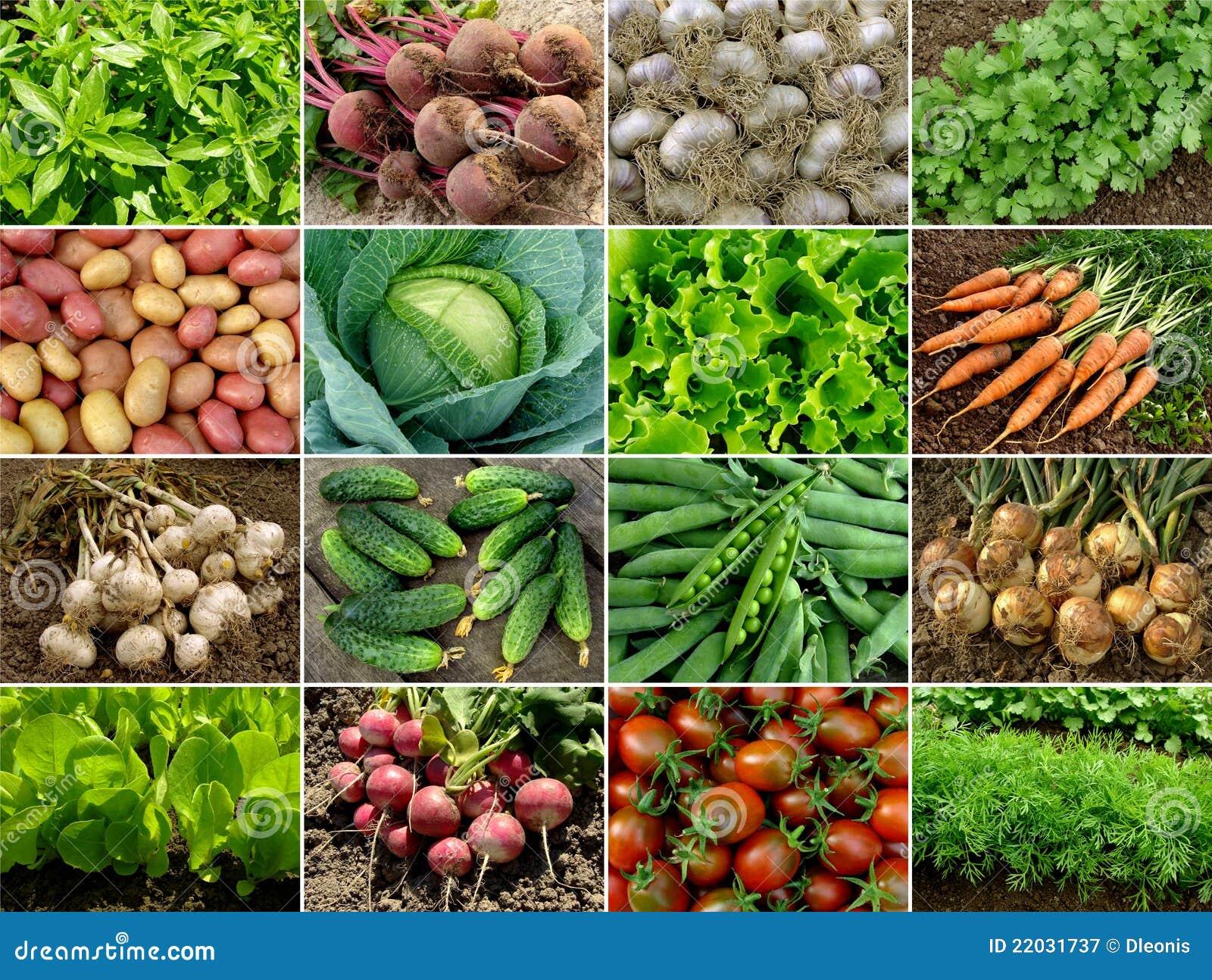 зеленеет овощи