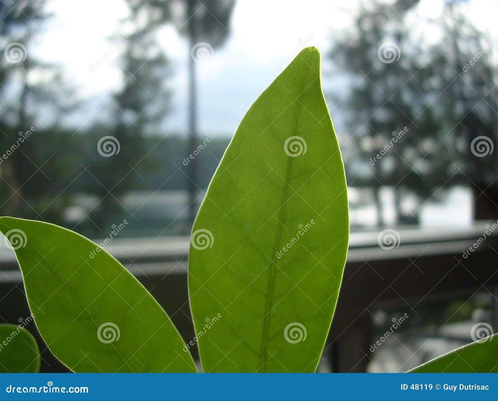 зеленеет рост