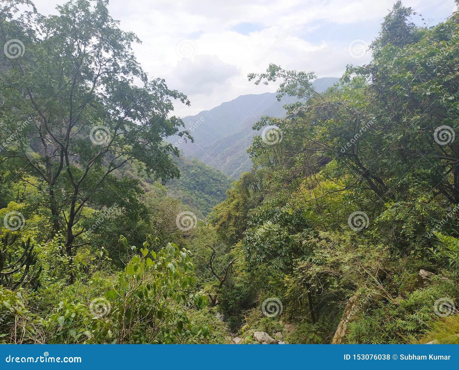 Зеленое дерево на верхнем холме и гора предпосылки внушительный