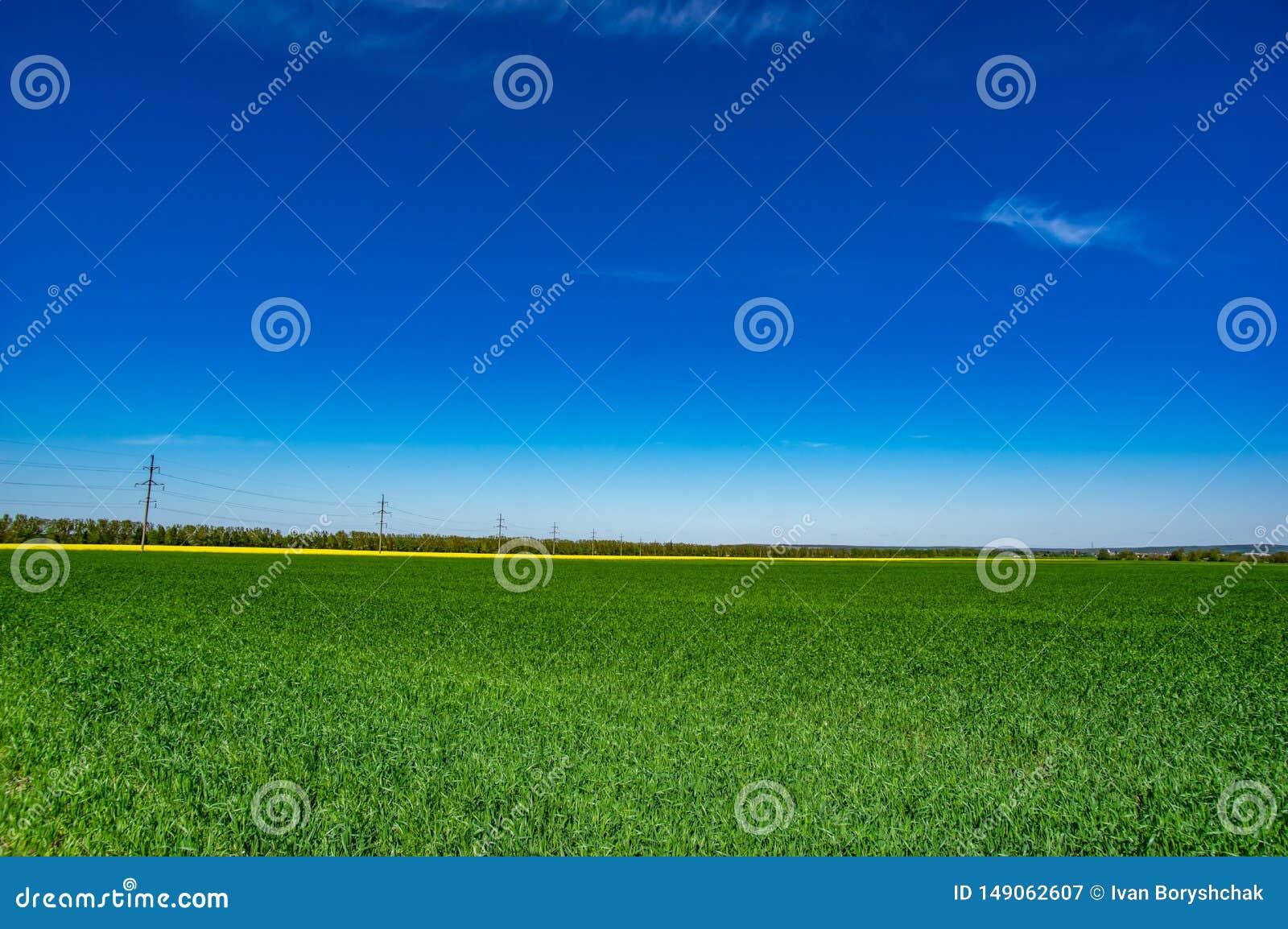 Зеленое поле на предпосылке голубого неба