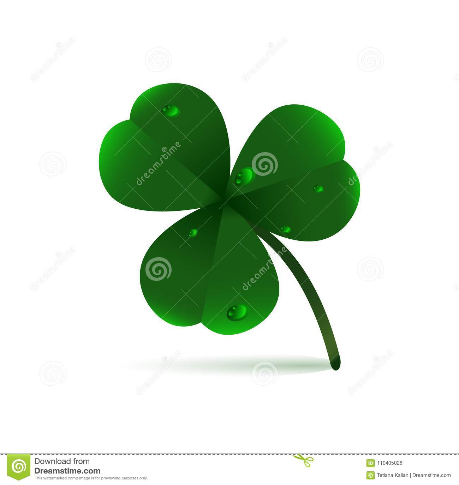 Зеленое растение весны fhree-листало клевер с росой, дождевыми каплями или waterdrops на белой предпосылке День ` s St. Patrick,