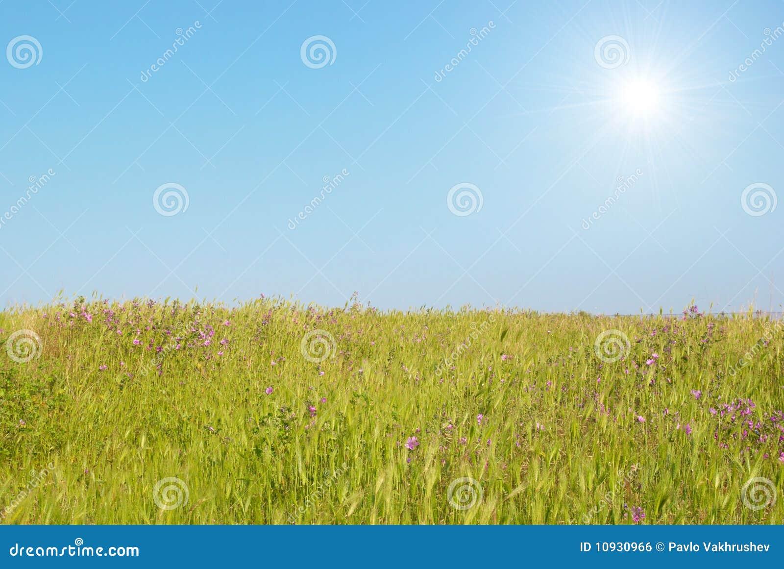 зеленое солнце ландшафта