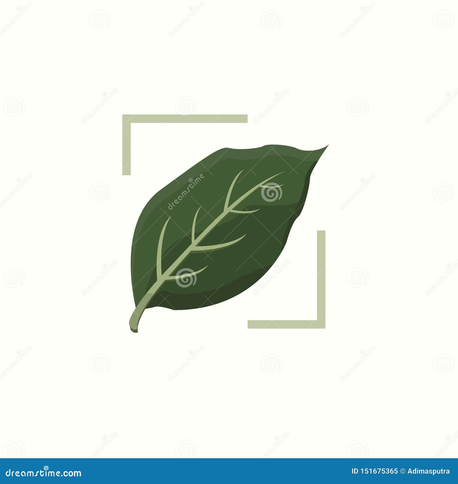 Зеленые ботанические лист антуриума