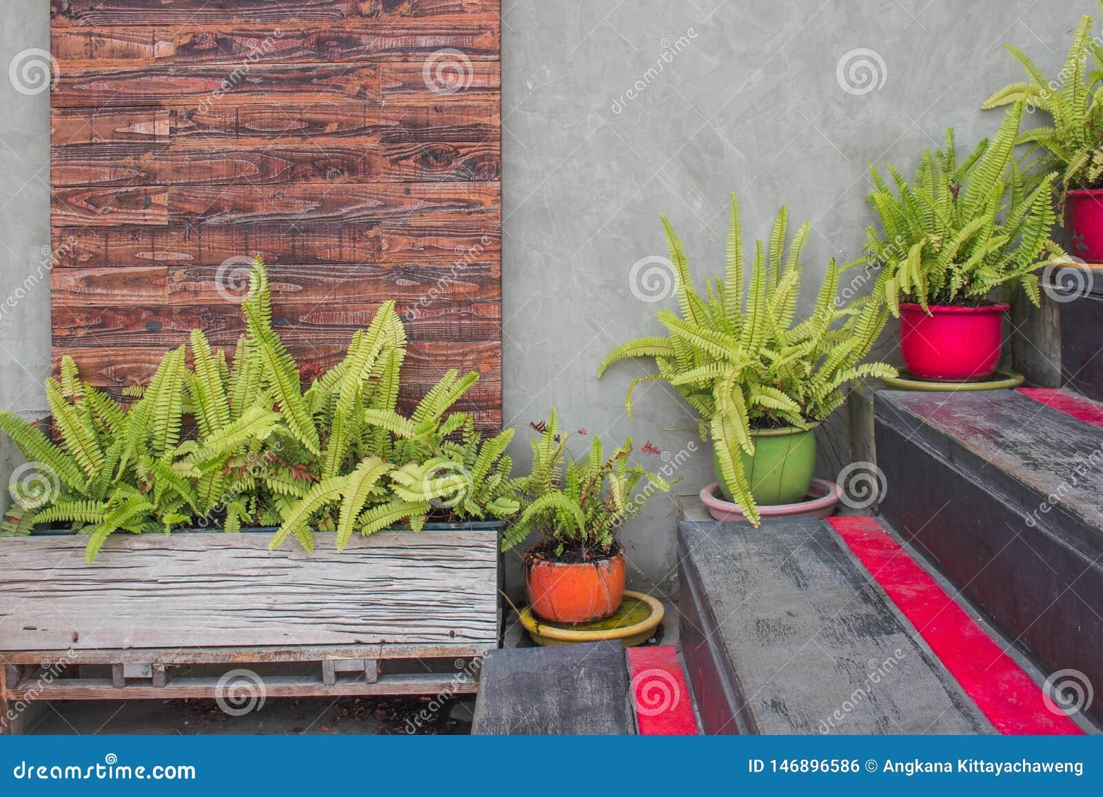Зеленые листья в цветочном горшке украшают на деревянных лестницах вне здания