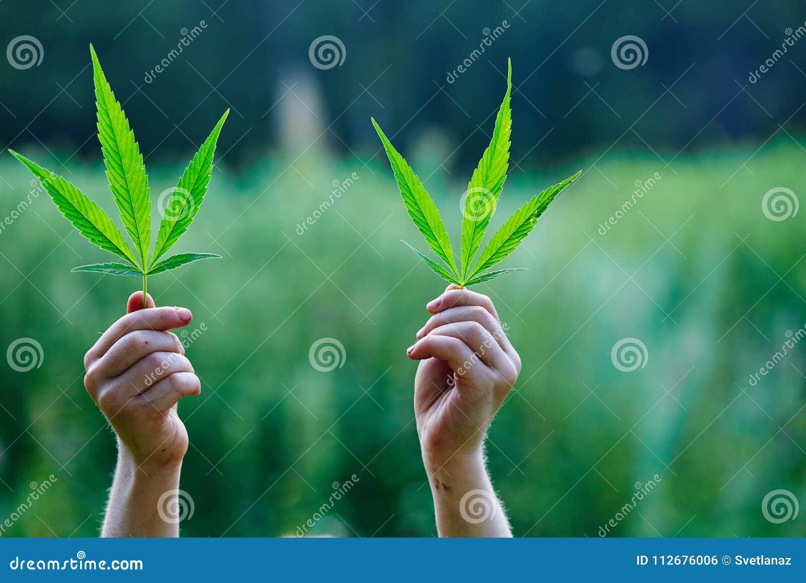 Конопля в руках мр3 медведей и марихуану