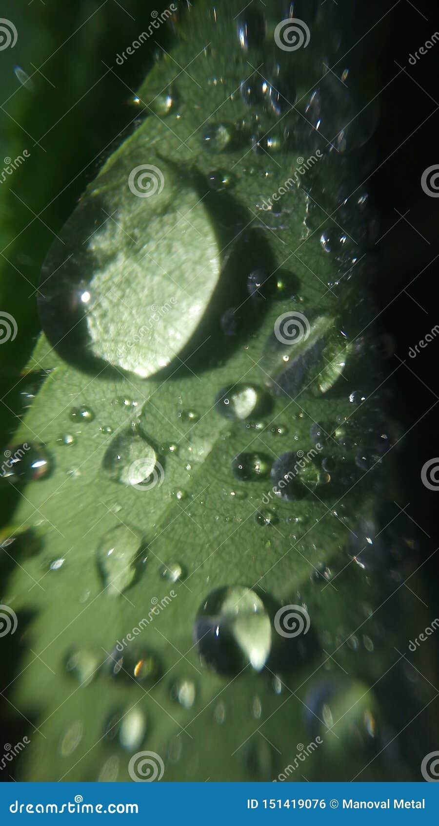 Зеленые лист