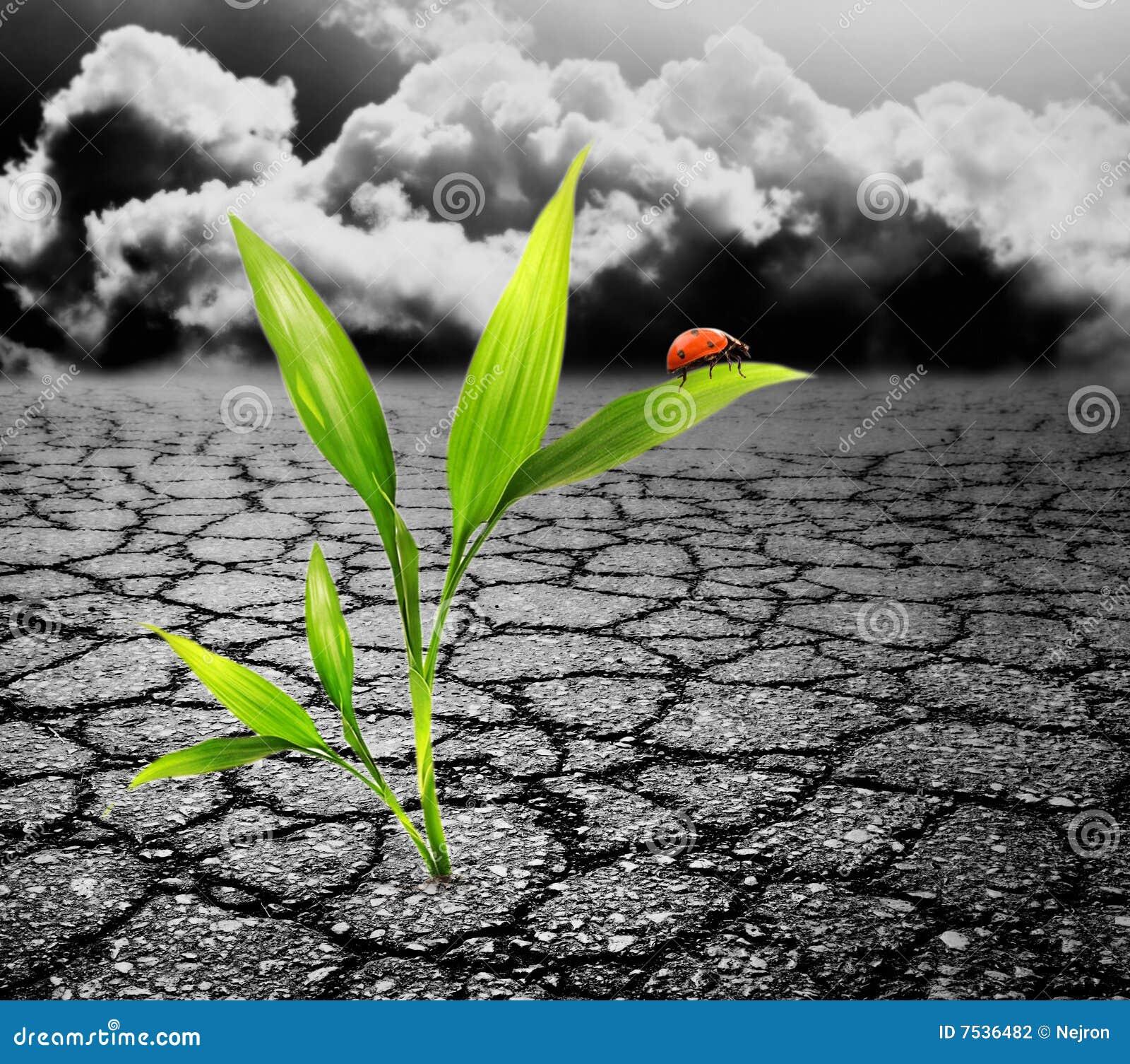 зеленый завод