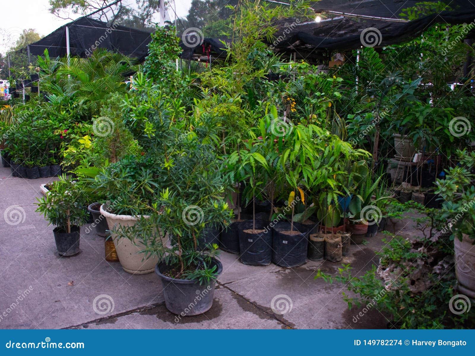 Зеленый и чистый ботанический сад