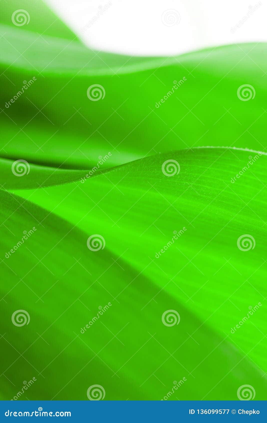 Зеленый конец-вверх лист, конец-вверх снял красивых заводов кривых