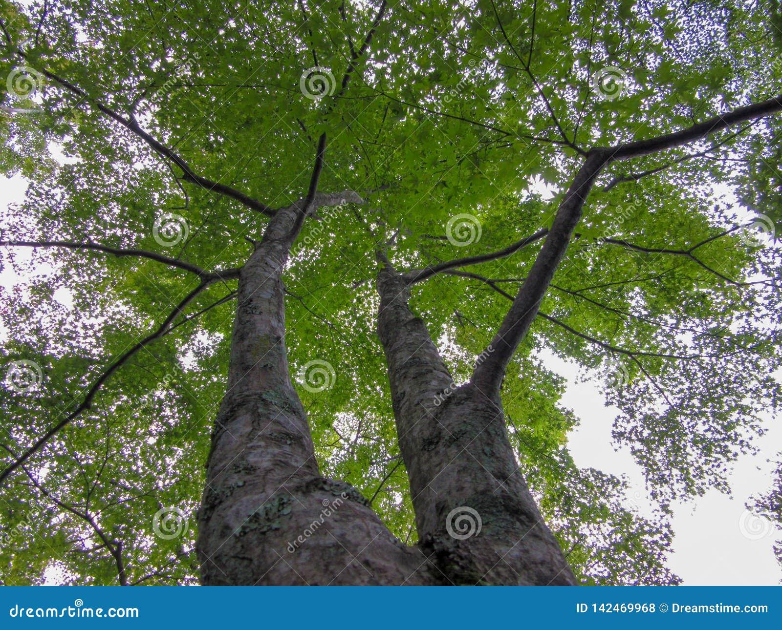 Зеленый лимб дерева