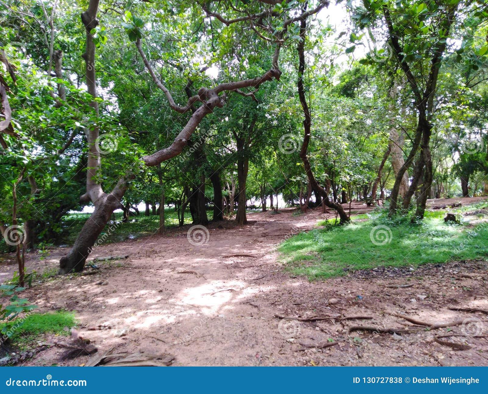 Зеленый остров, окруженный деревьями воды тропическими